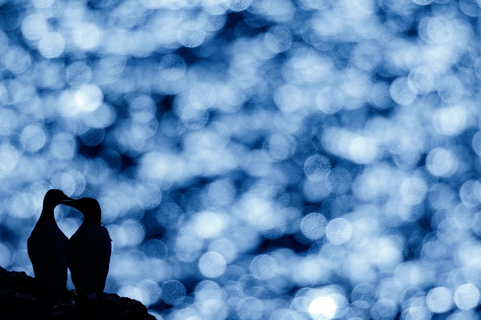 Cold heart - Mario Suarez - Portfolio Natural, Fotografía de Naturaleza de Autor