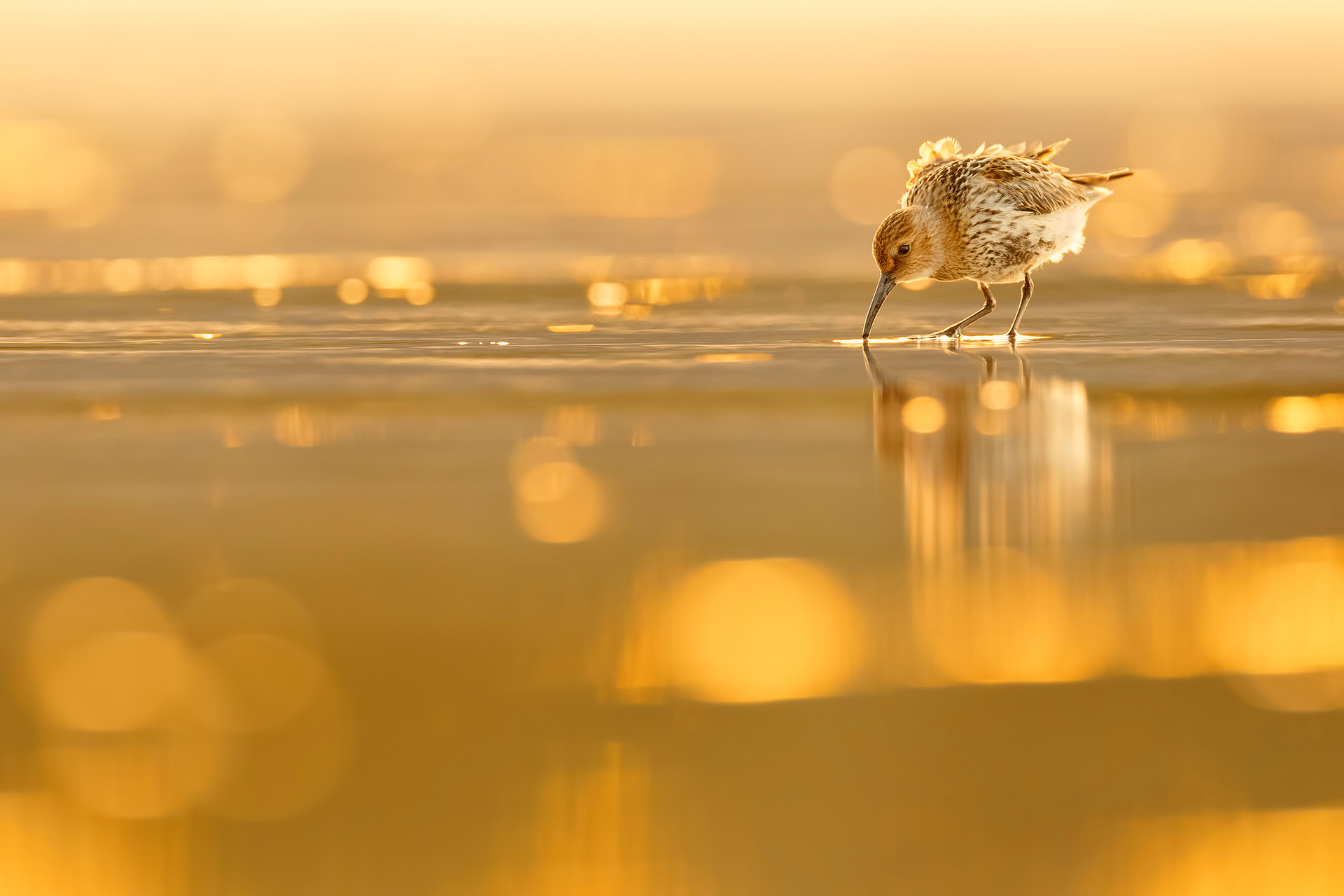 Golden shore - Mario Suarez - Portfolio Natural, Fotografía de Naturaleza de Autor