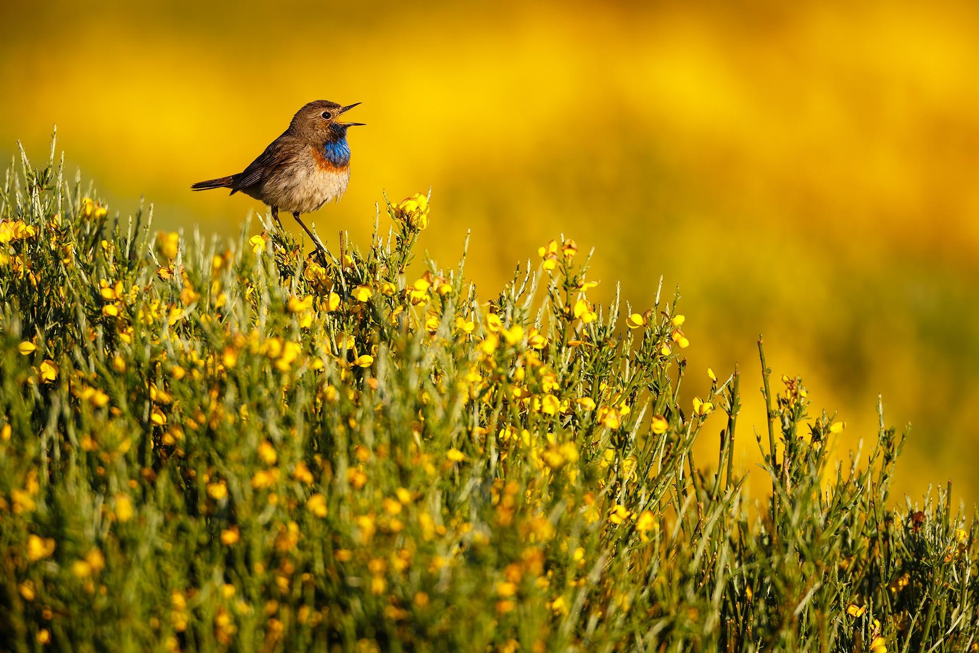 Canto de primavera - Mario Suarez - Portfolio Natural, Fotografía de Naturaleza de Autor