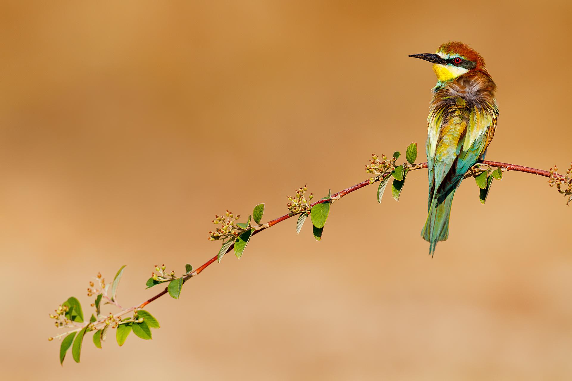 Composición de abejaruco - Mario Suarez - Portfolio Natural, Fotografía de Naturaleza de Autor