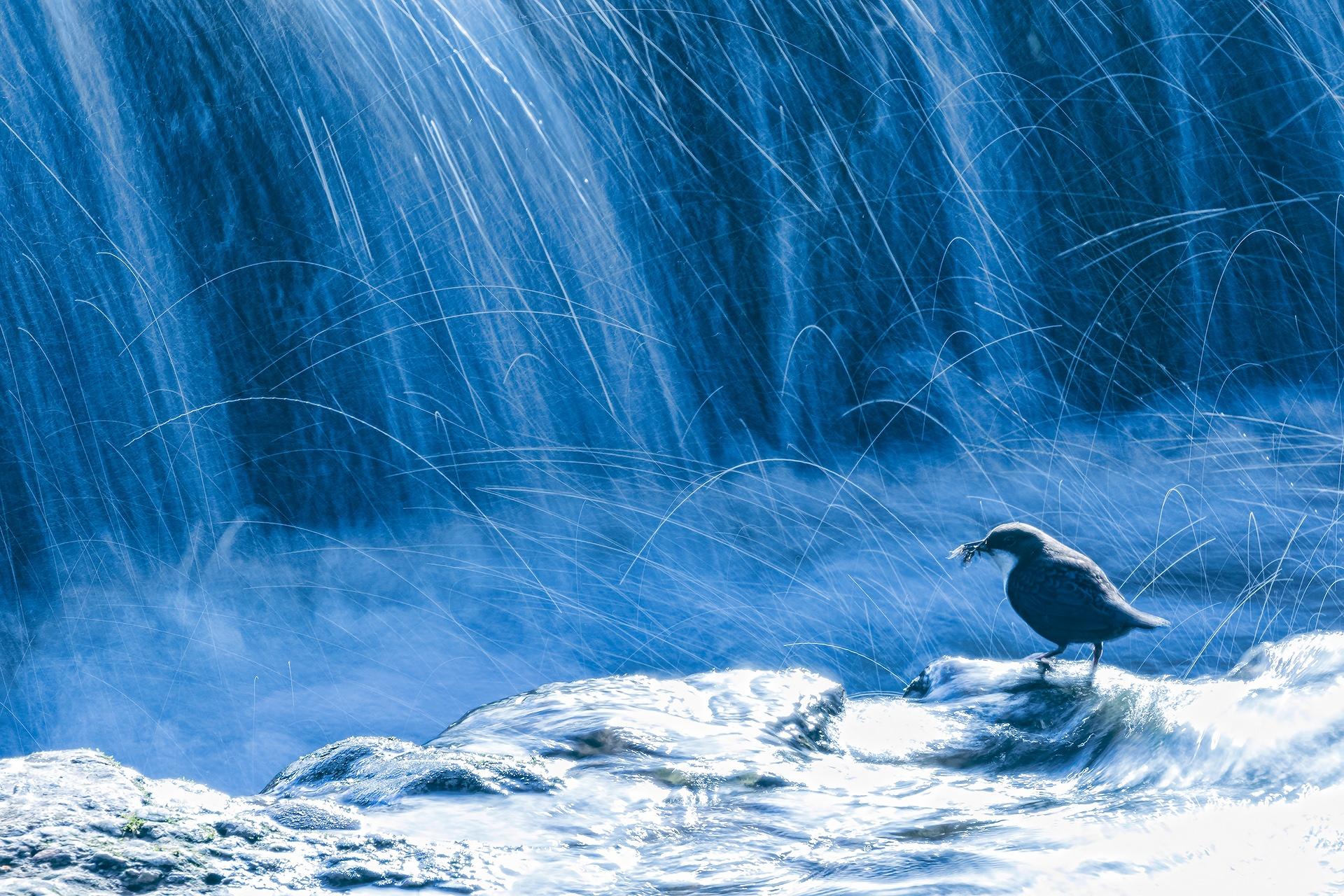 Water bird - Mario Suarez - Portfolio Natural, Fotografía de Naturaleza de Autor