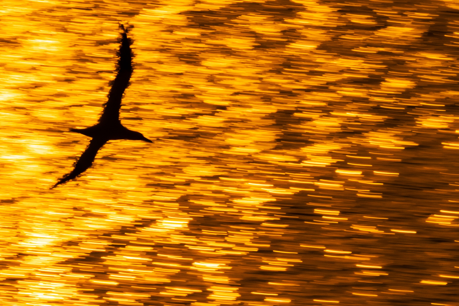 Last flight - Mario Suarez - Portfolio Natural, Fotografía de Naturaleza de Autor