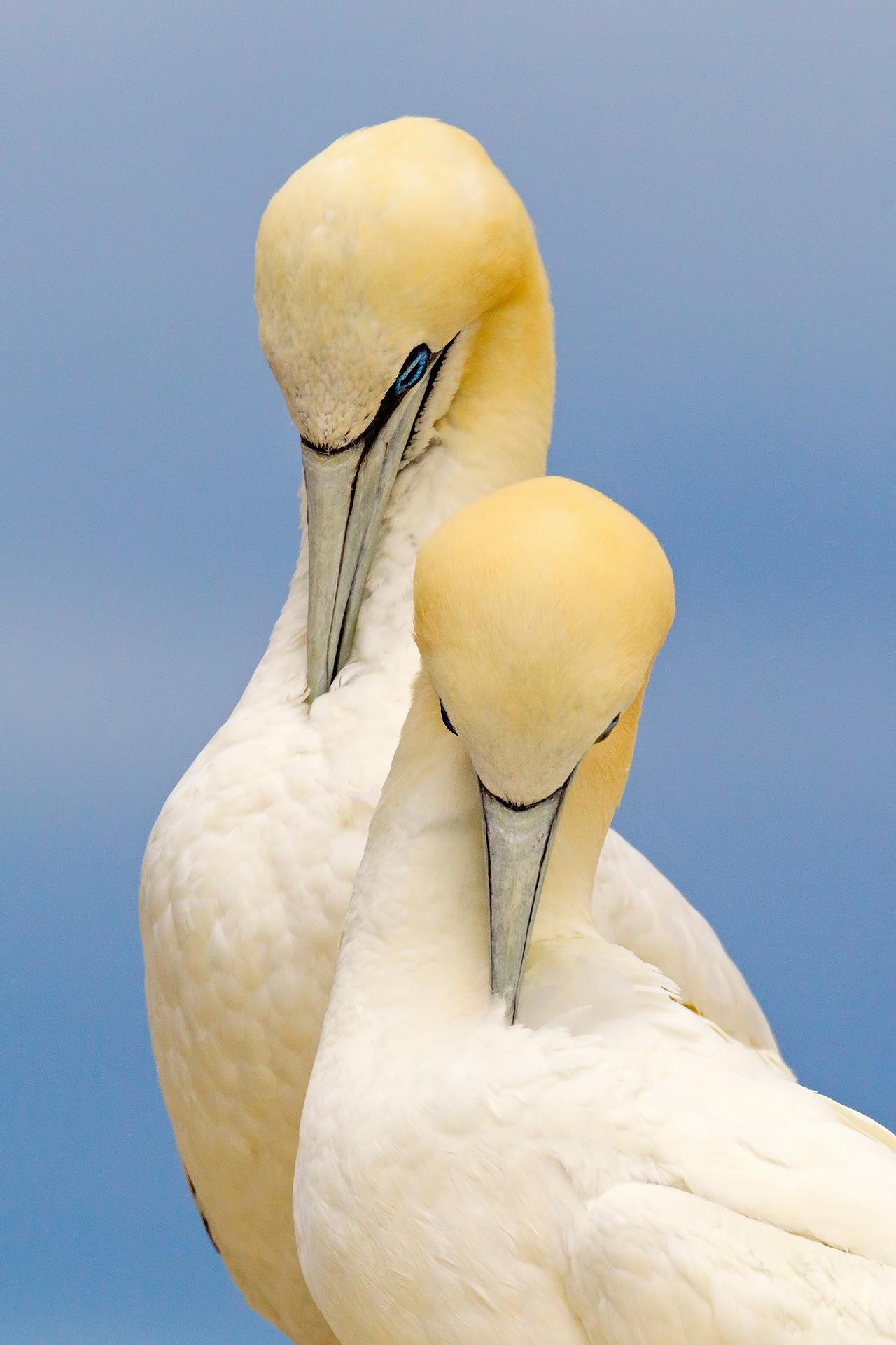 Two lovers - Mario Suarez - Portfolio Natural, Fotografía de Naturaleza de Autor