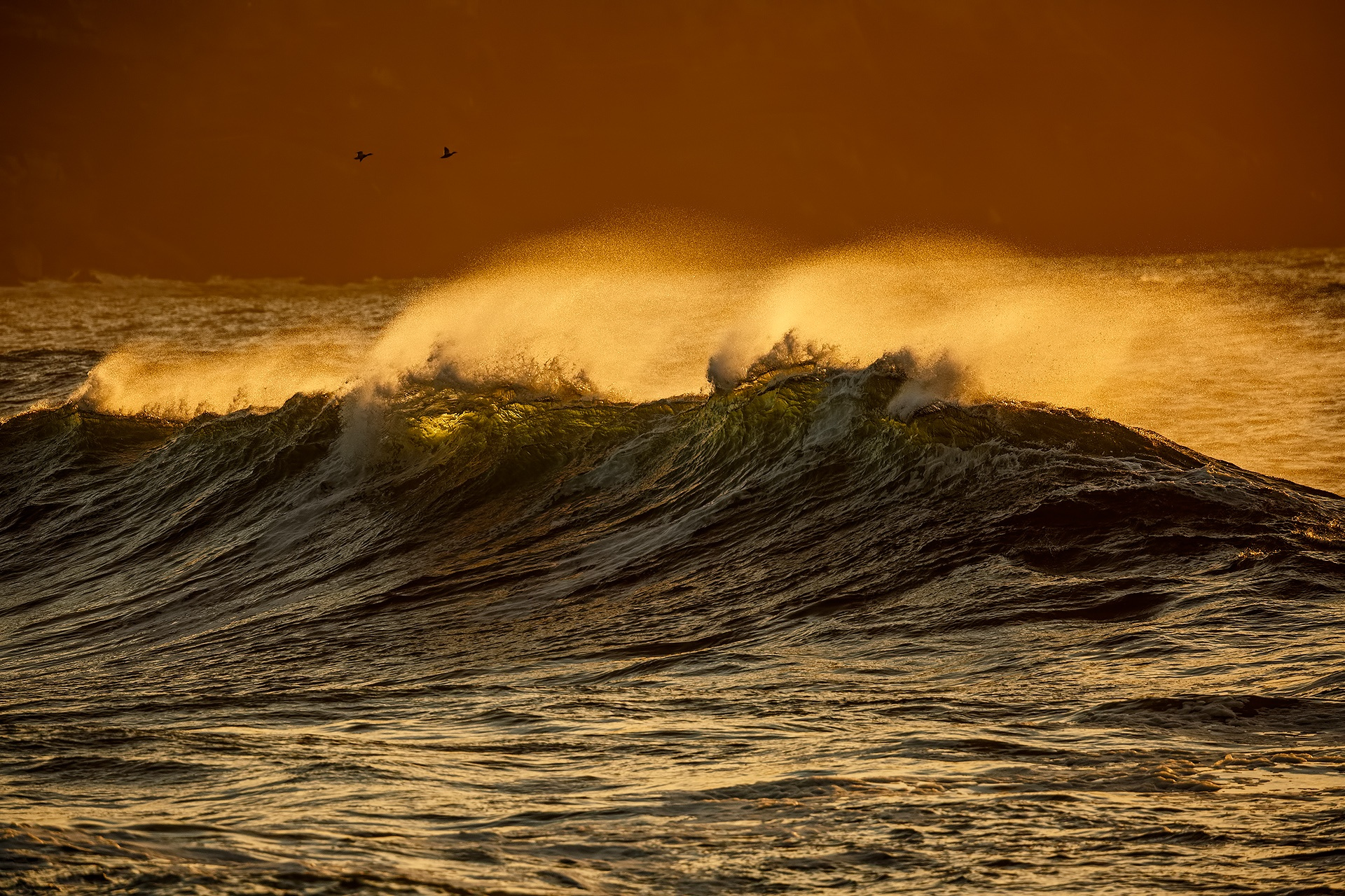Overflying the waves - Mario Suarez - Portfolio Natural, Fotografía de Naturaleza de Autor