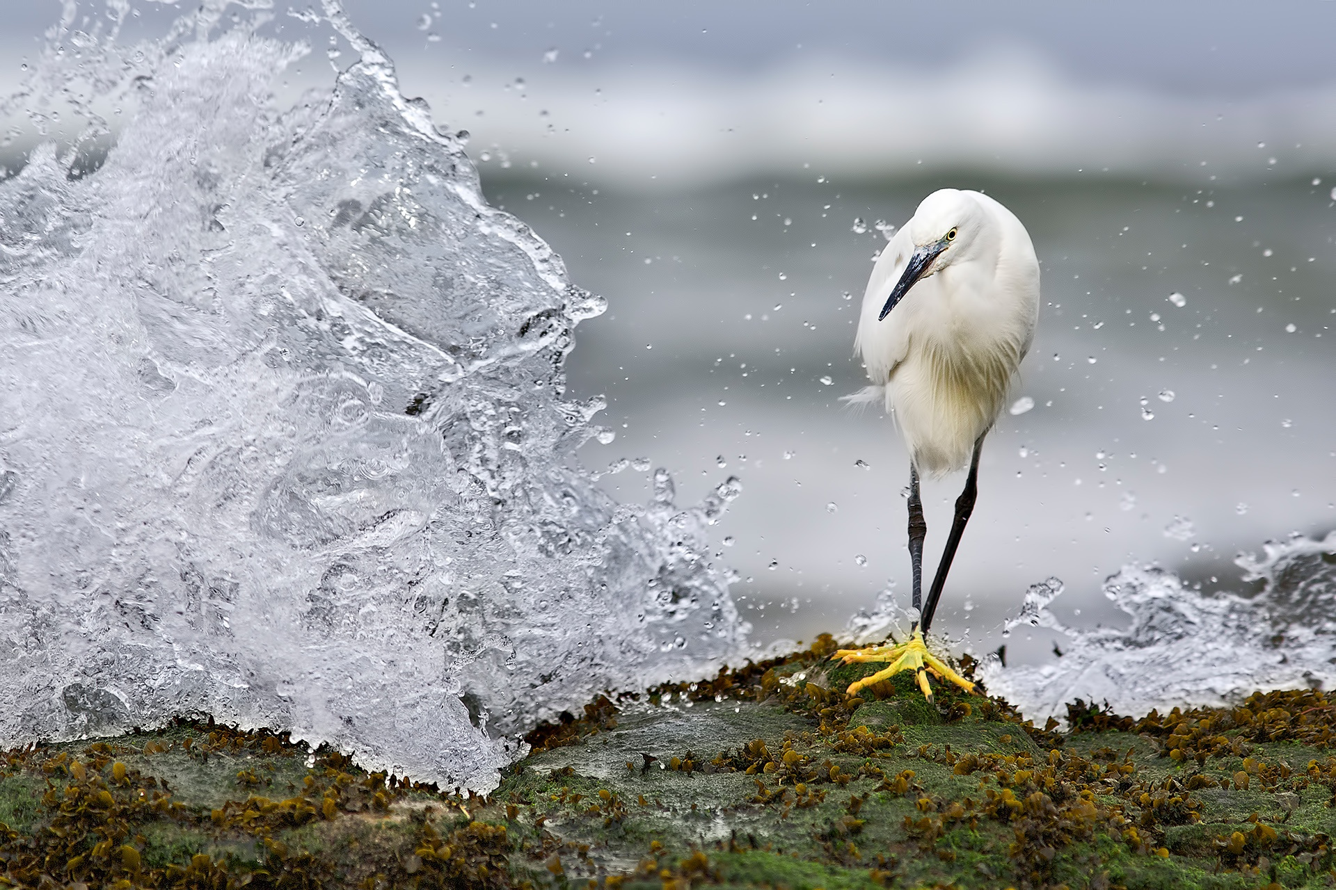 The Wave - Mario Suarez - Portfolio Natural, Fotografía de Naturaleza de Autor