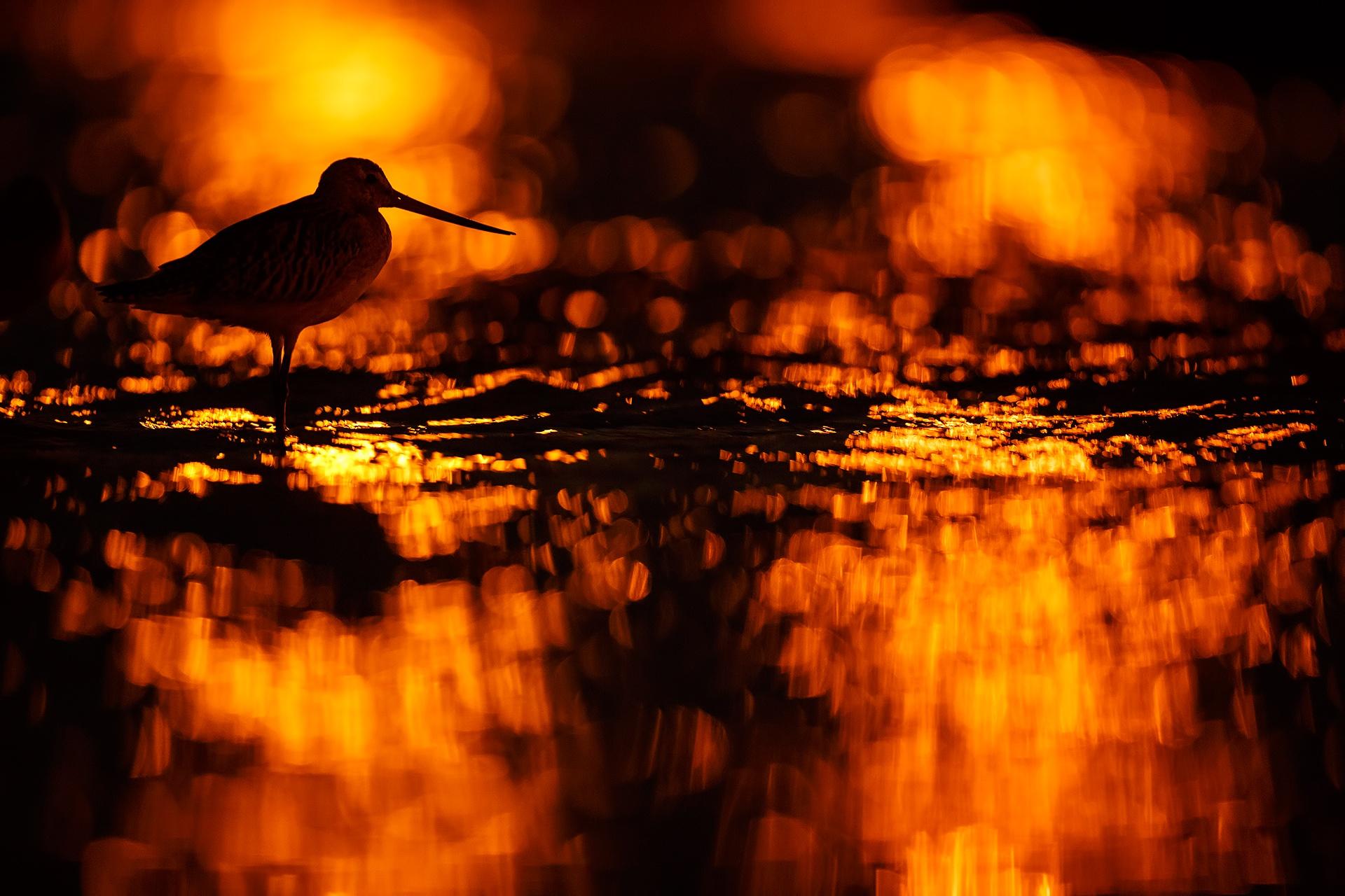 Bird of fire - Mario Suarez - Portfolio Natural, Fotografía de Naturaleza de Autor