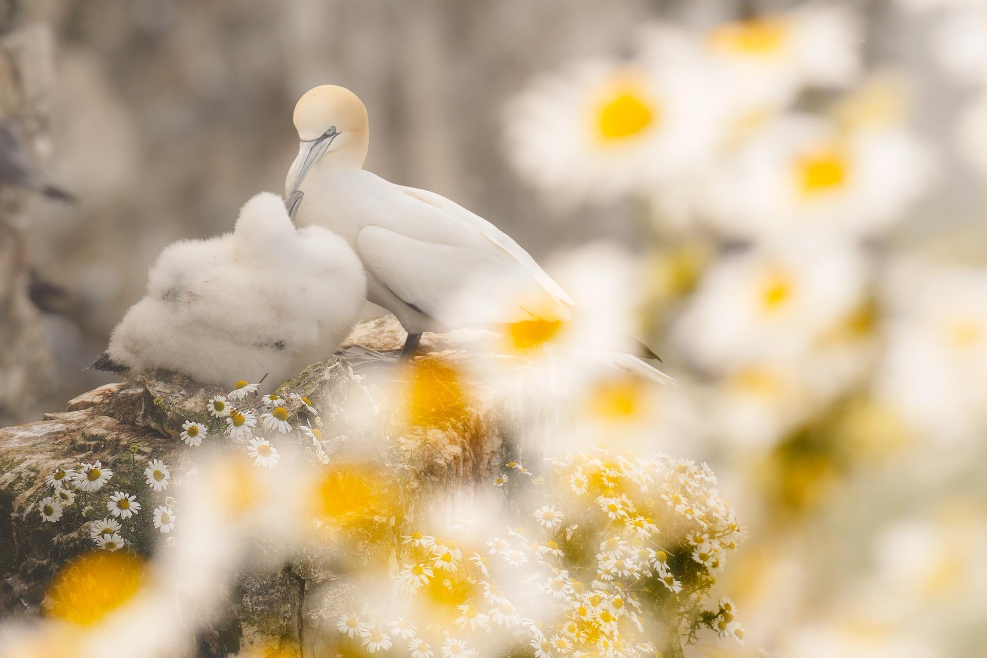 Mother´s love - Mario Suarez - Portfolio Natural, Fotografía de Naturaleza de Autor