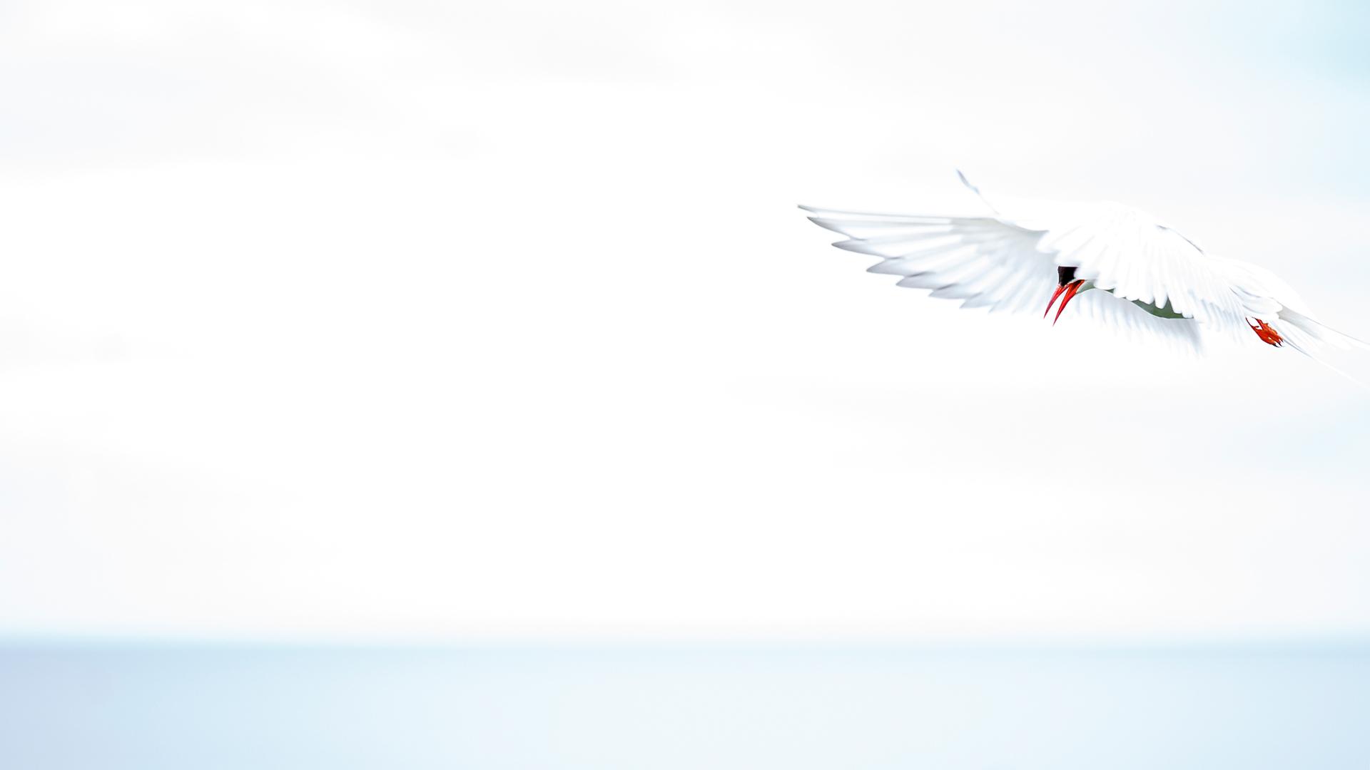 Angel - Mario Suarez - Portfolio Natural, Fotografía de Naturaleza de Autor