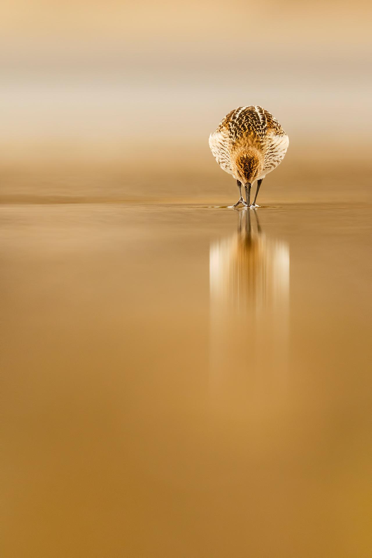 seashore bird - Mario Suarez - Portfolio Natural, Fotografía de Naturaleza de Autor