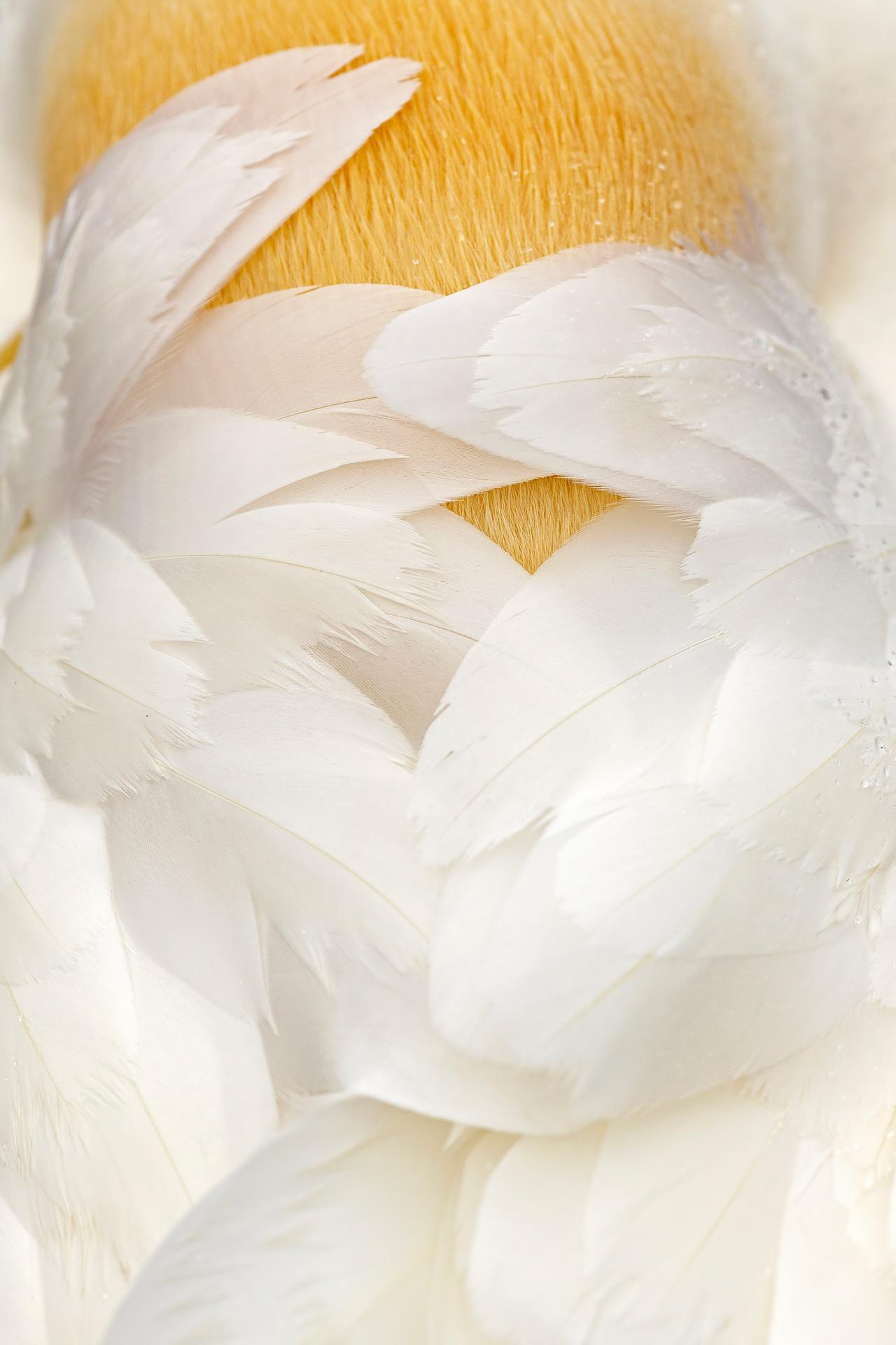 Ángel dormido - Mario Suarez - Portfolio Natural, Fotografía de Naturaleza de Autor