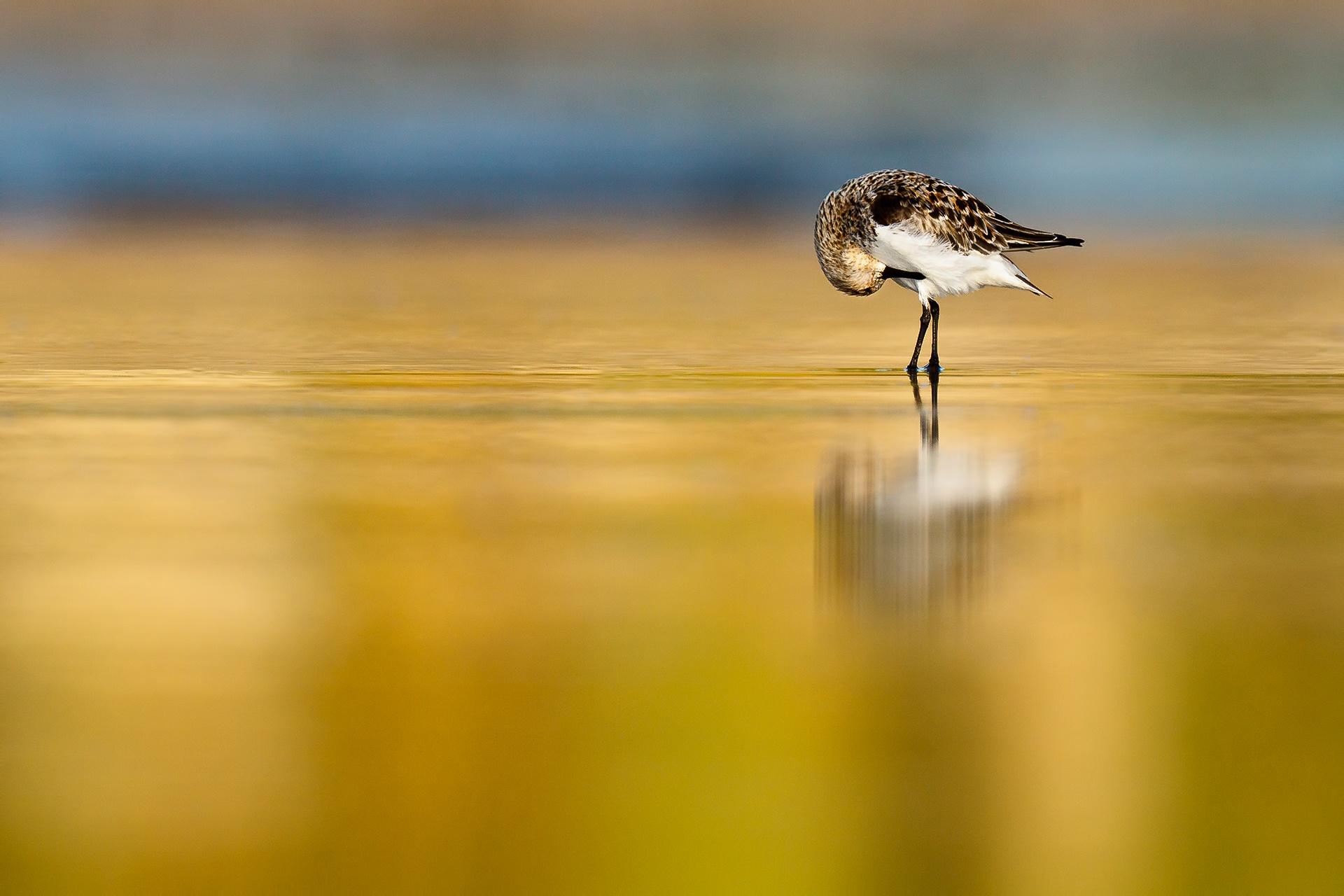 Reverence - Mario Suarez - Portfolio Natural, Fotografía de Naturaleza de Autor