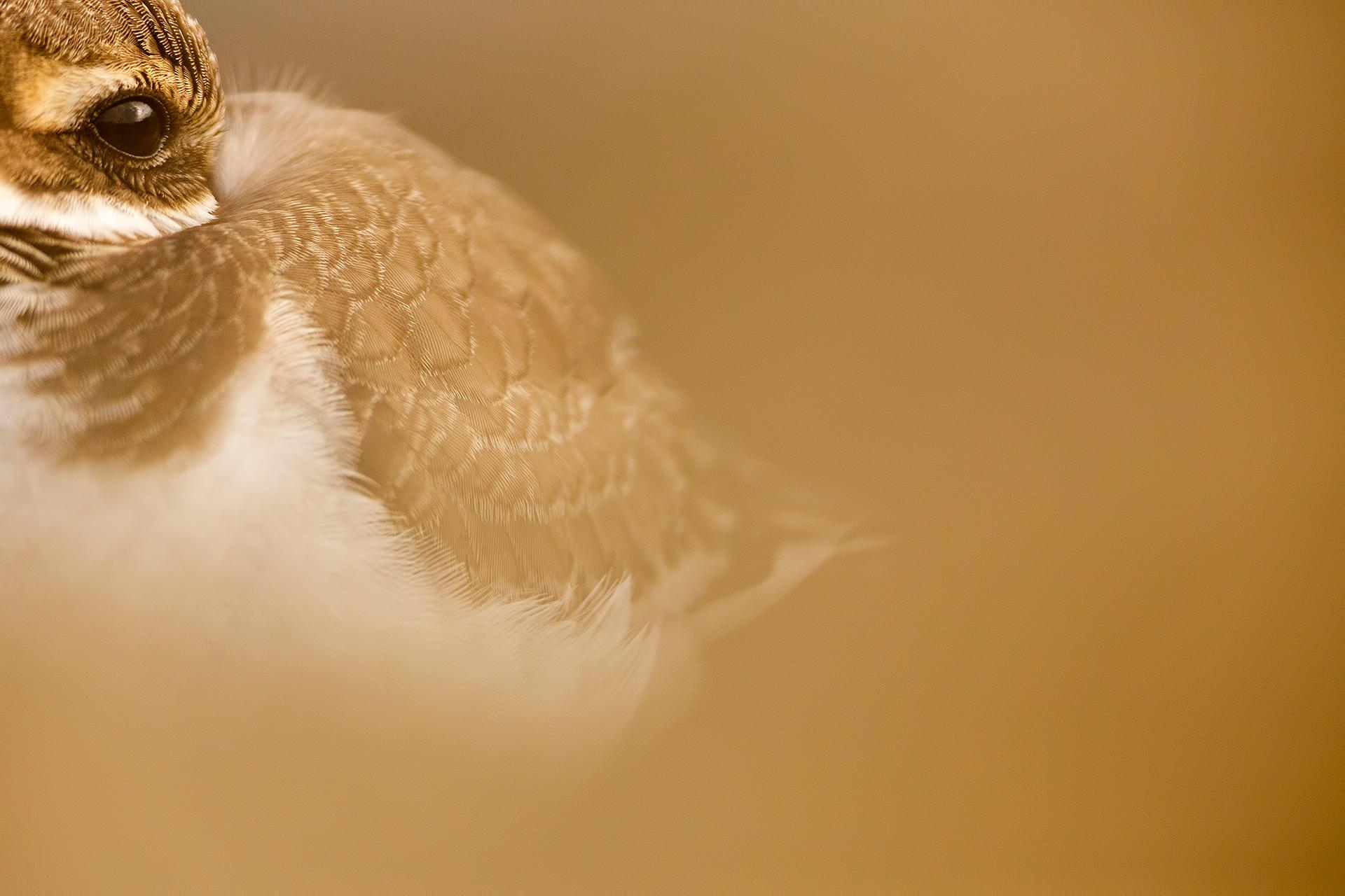 Look of plover - Mario Suarez - Portfolio Natural, Fotografía de Naturaleza de Autor