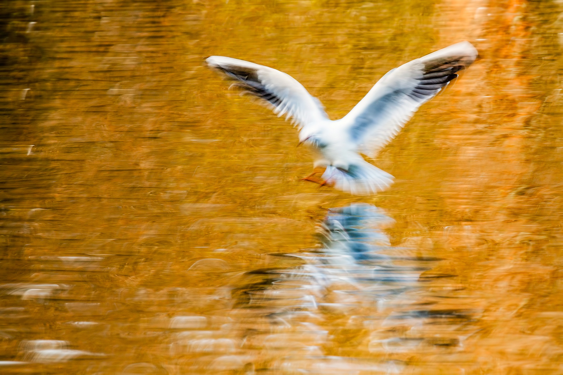 Water spirit - Mario Suarez - Portfolio Natural, Fotografía de Naturaleza de Autor
