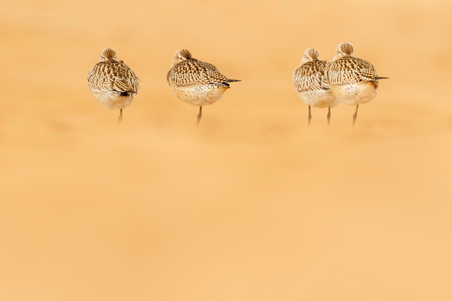 Sueño de arena - Mario Suarez - Portfolio Natural, Fotografía de Naturaleza de Autor