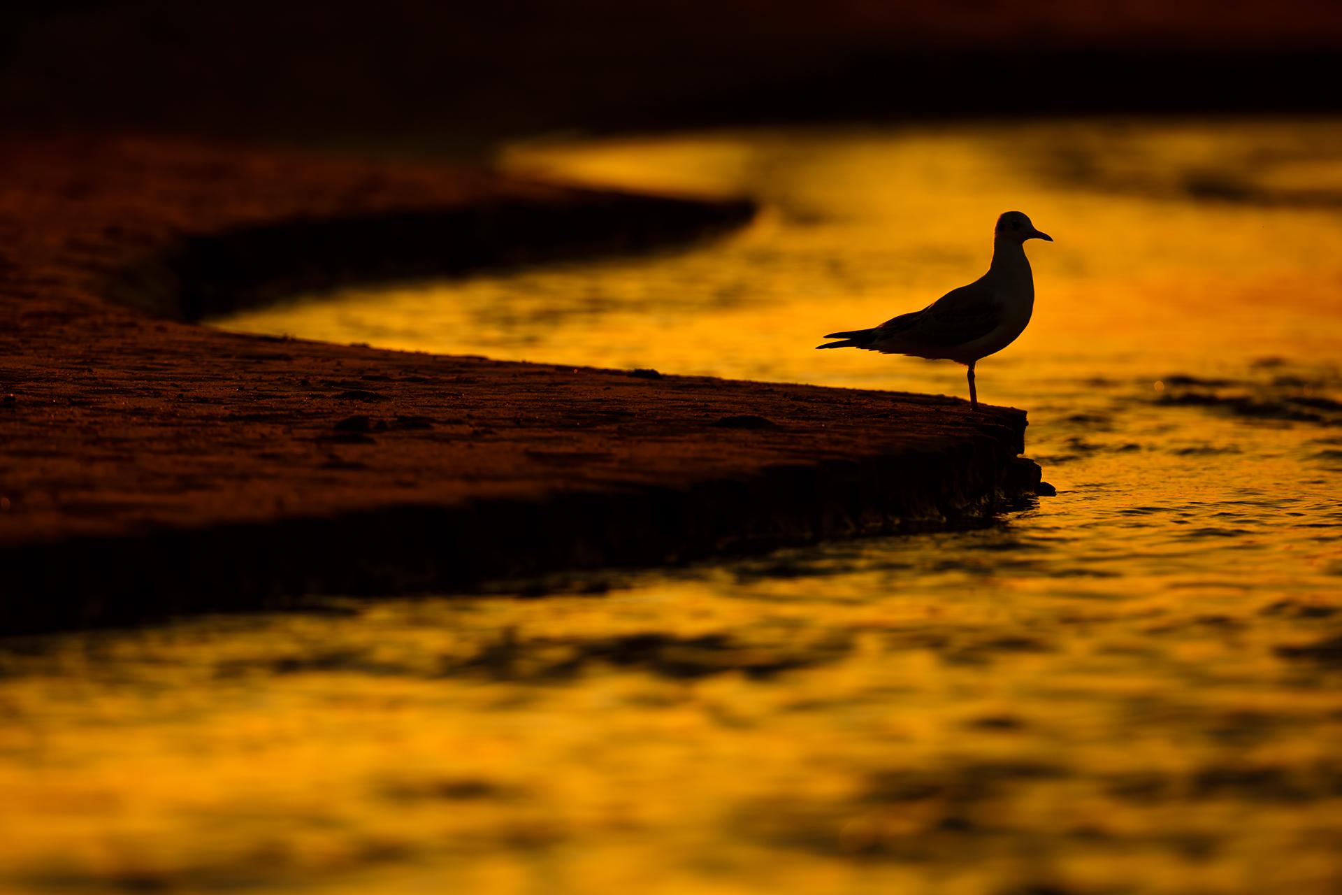 Lines of peace - Mario Suarez - Portfolio Natural, Fotografía de Naturaleza de Autor