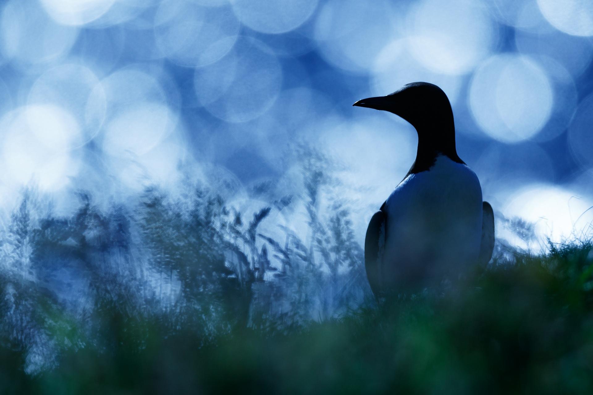 In my solitude - Mario Suarez - Portfolio Natural, Fotografía de Naturaleza de Autor