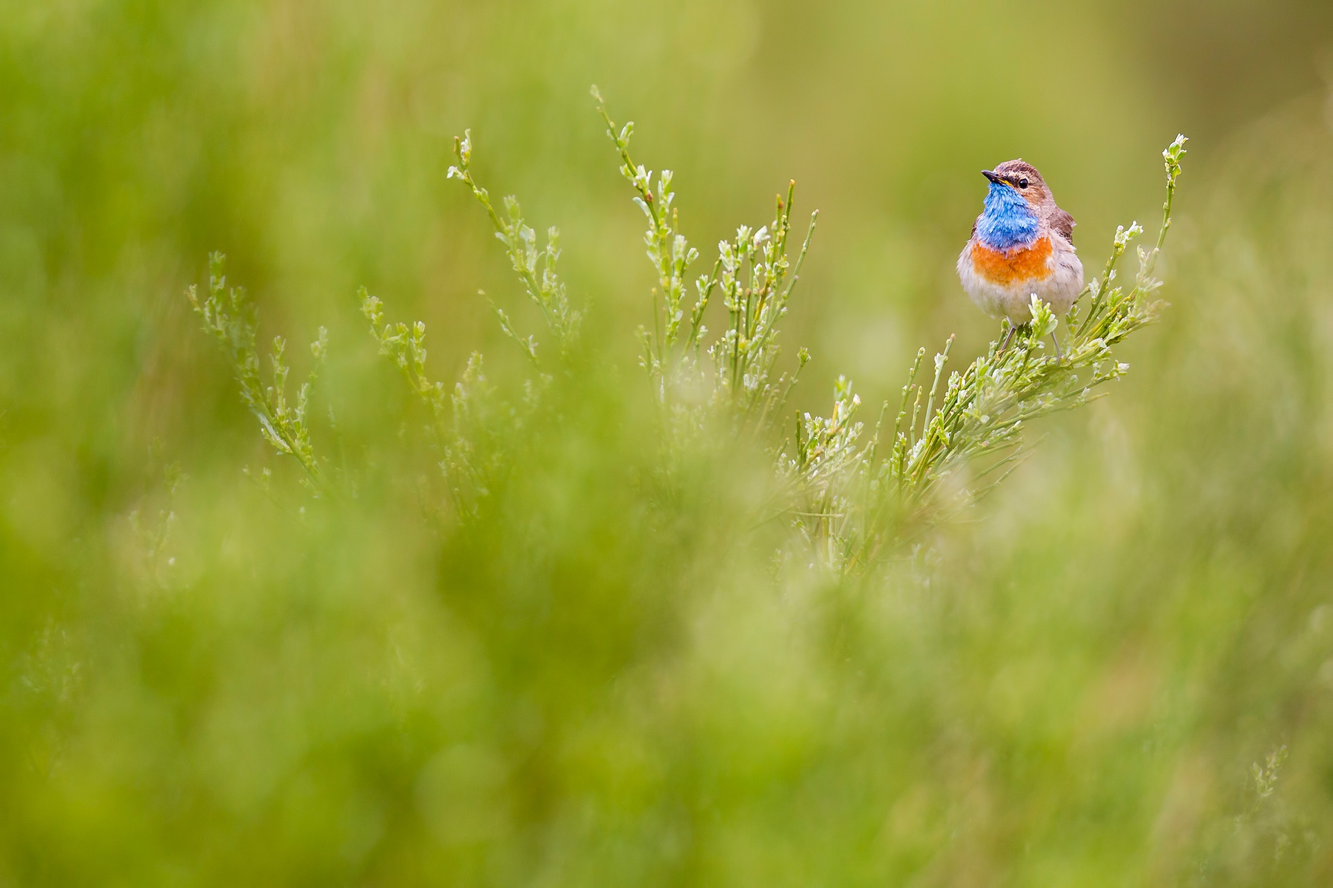 Blue patch - Mario Suarez - Portfolio Natural, Fotografía de Naturaleza de Autor