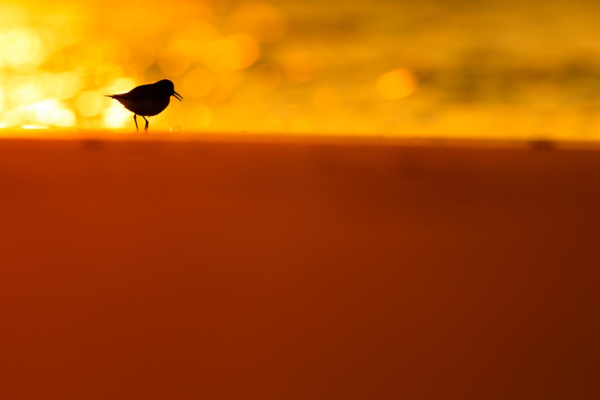 Blister on the sun - Mario Suarez - Portfolio Natural, Fotografía de Naturaleza de Autor