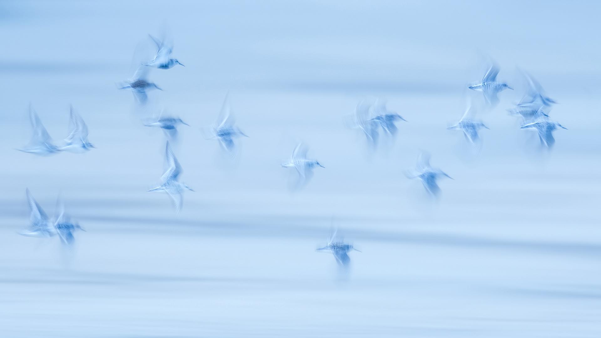 Together - Mario Suarez - Portfolio Natural, Fotografía de Naturaleza de Autor