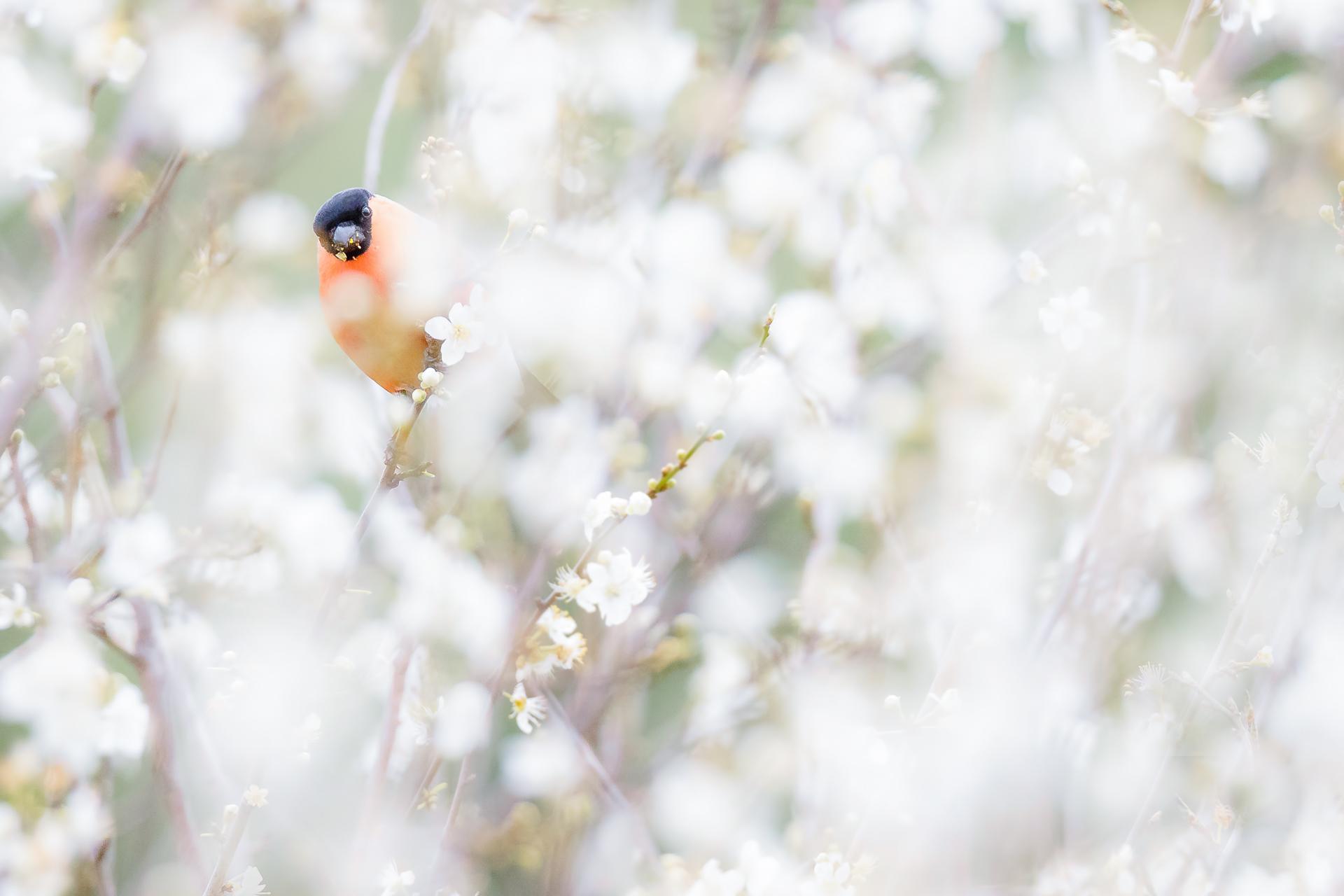 Spring is here - Mario Suarez - Portfolio Natural, Fotografía de Naturaleza de Autor