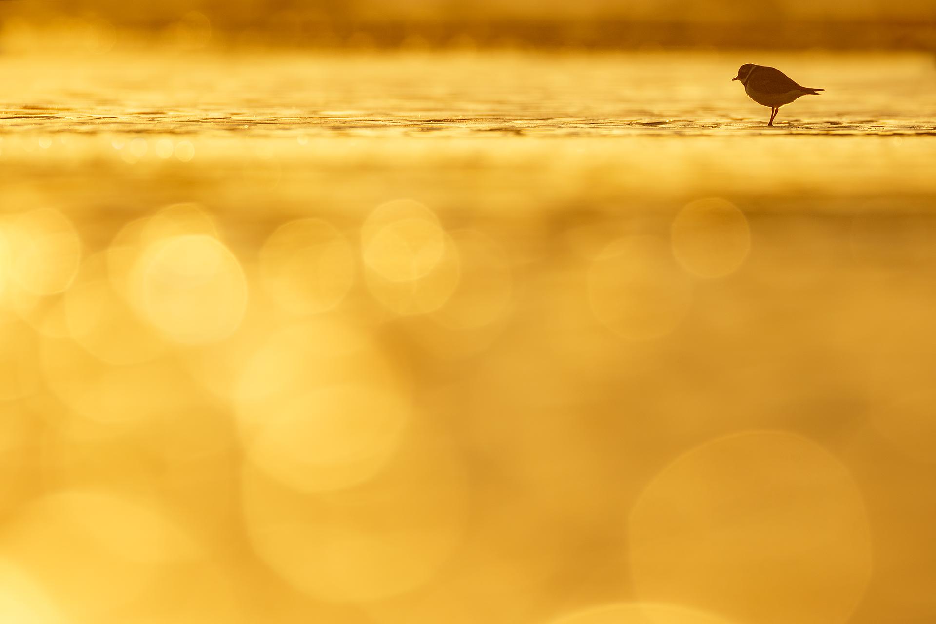 King of the shore - Mario Suarez - Portfolio Natural, Fotografía de Naturaleza de Autor