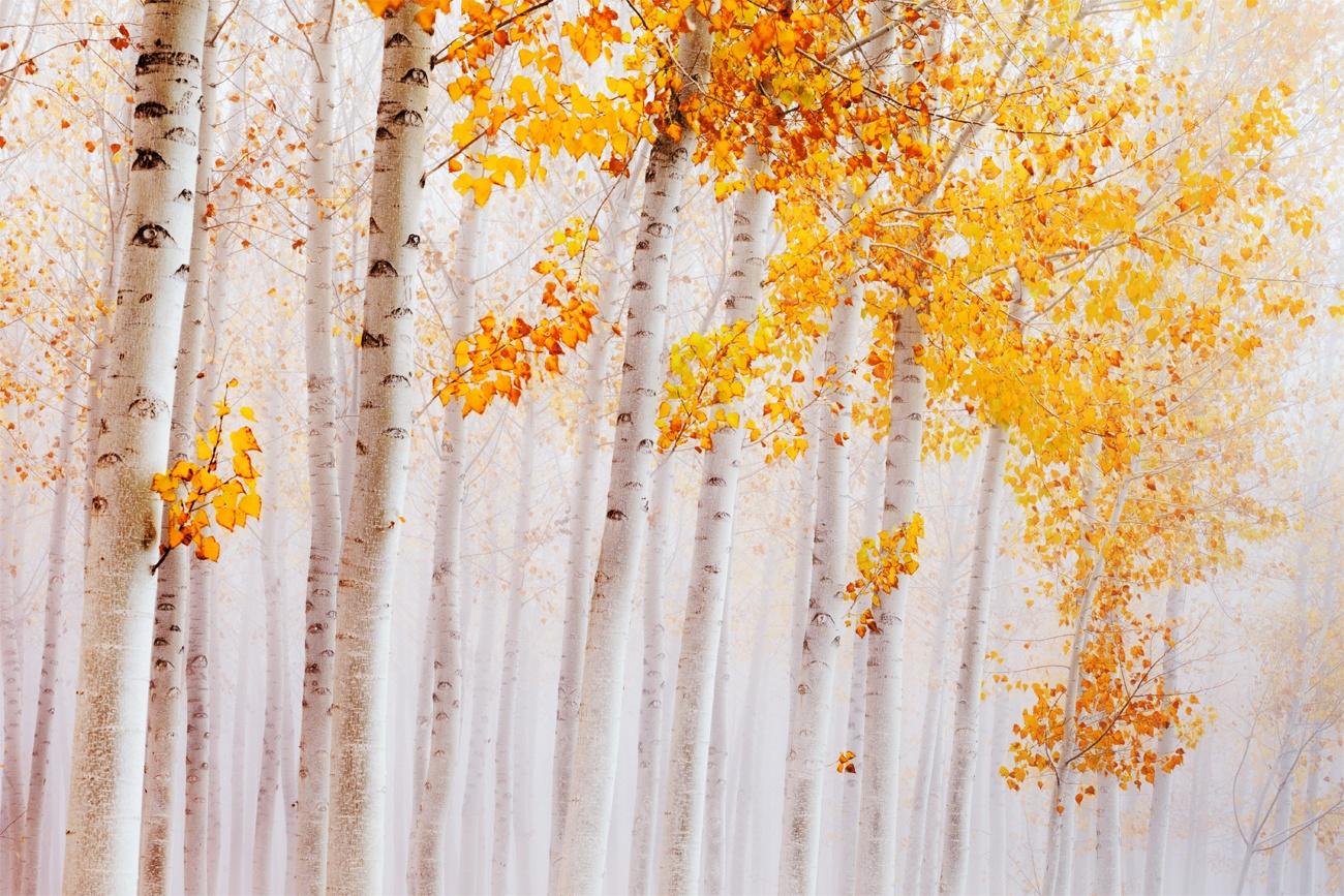Autumnal Symphony - David Frutos Egea - David Frutos Egea - Portfolio Natural