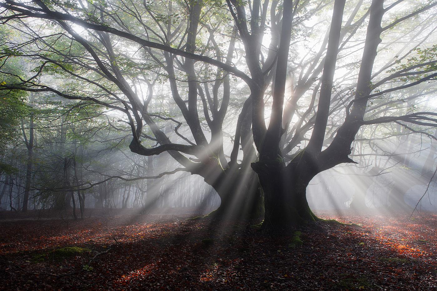 HACIENDO EL AMOR - Juan Pixelecta - Portfolio Natural, Fotografía de Naturaleza de Autor