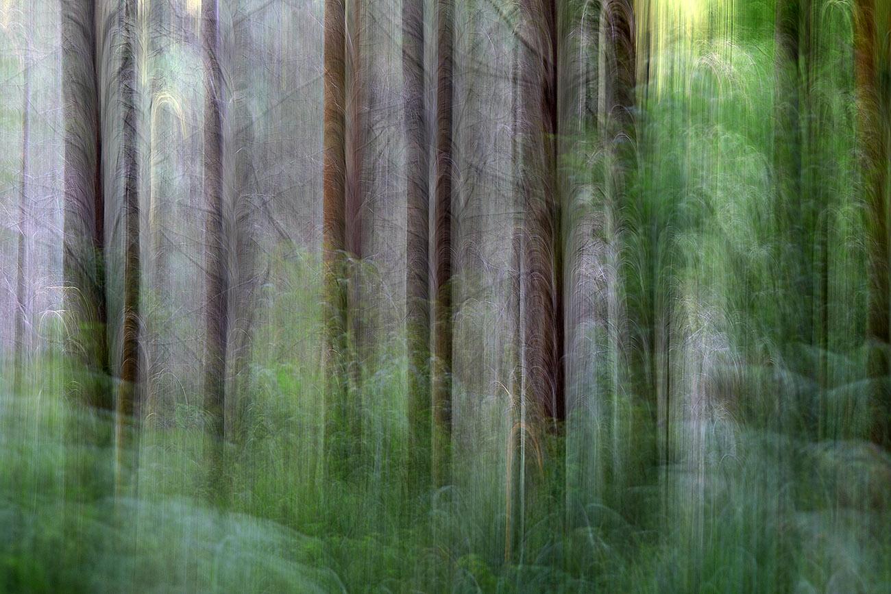 bederatzi - Luis Llavori - Portfolio Natural, Fotografía de Naturaleza de Autor