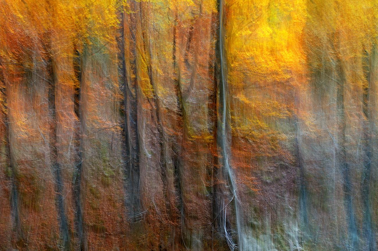 hamabi - Luis Llavori - Portfolio Natural, Fotografía de Naturaleza de Autor