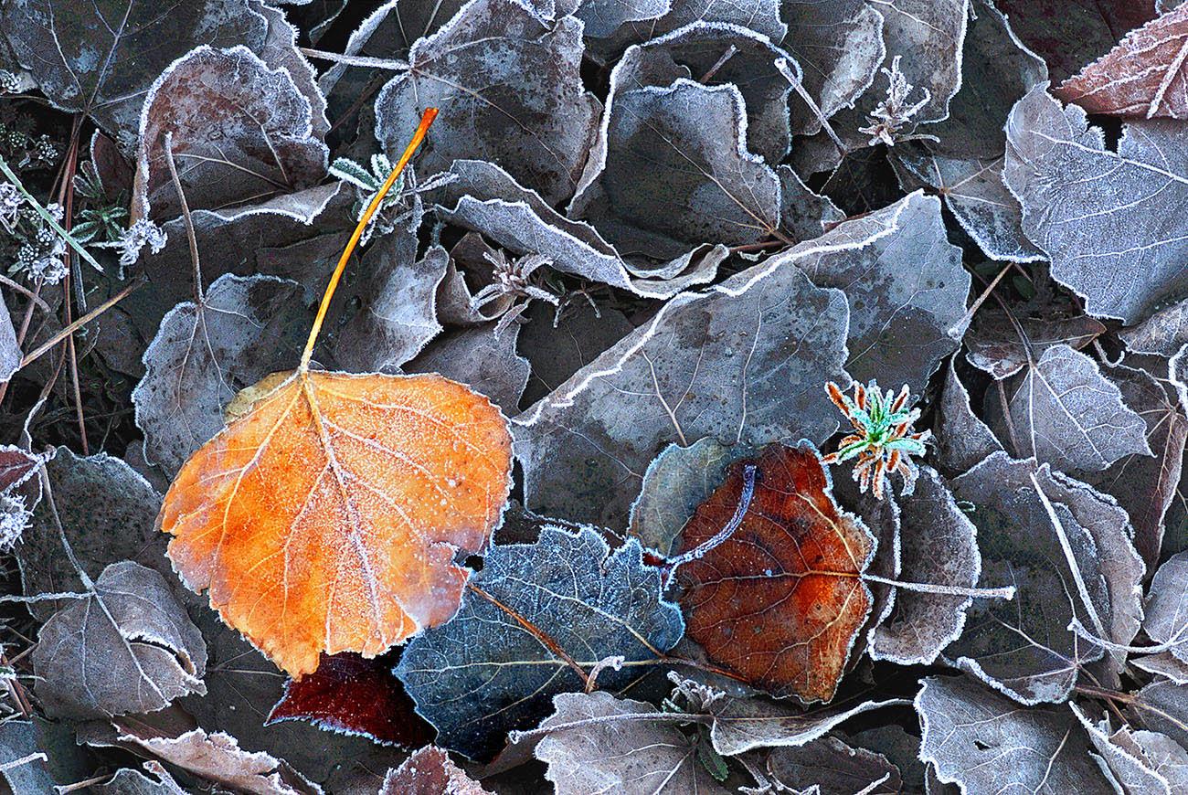 hogeitabat - Luis Llavori - Portfolio Natural, Fotografía de Naturaleza de Autor