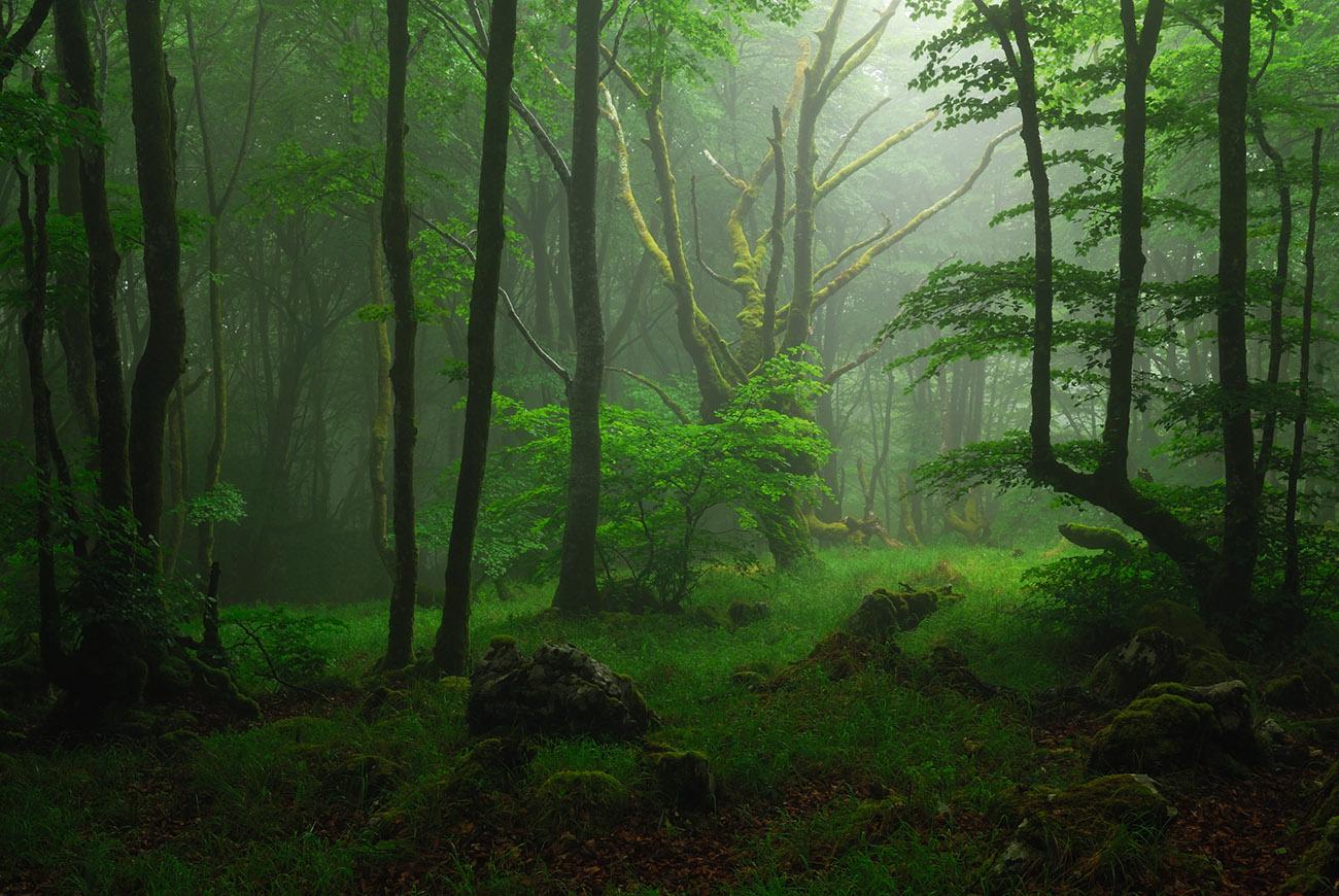 hogeitahamabost - Luis Llavori - Portfolio Natural, Fotografía de Naturaleza de Autor