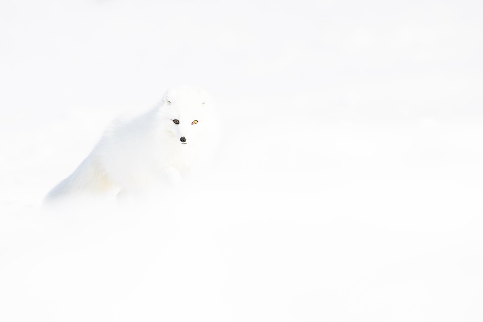 Perfect Camouflage - Ignacio Medem - Portfolio Natural, Fotografía de Naturaleza de Autor