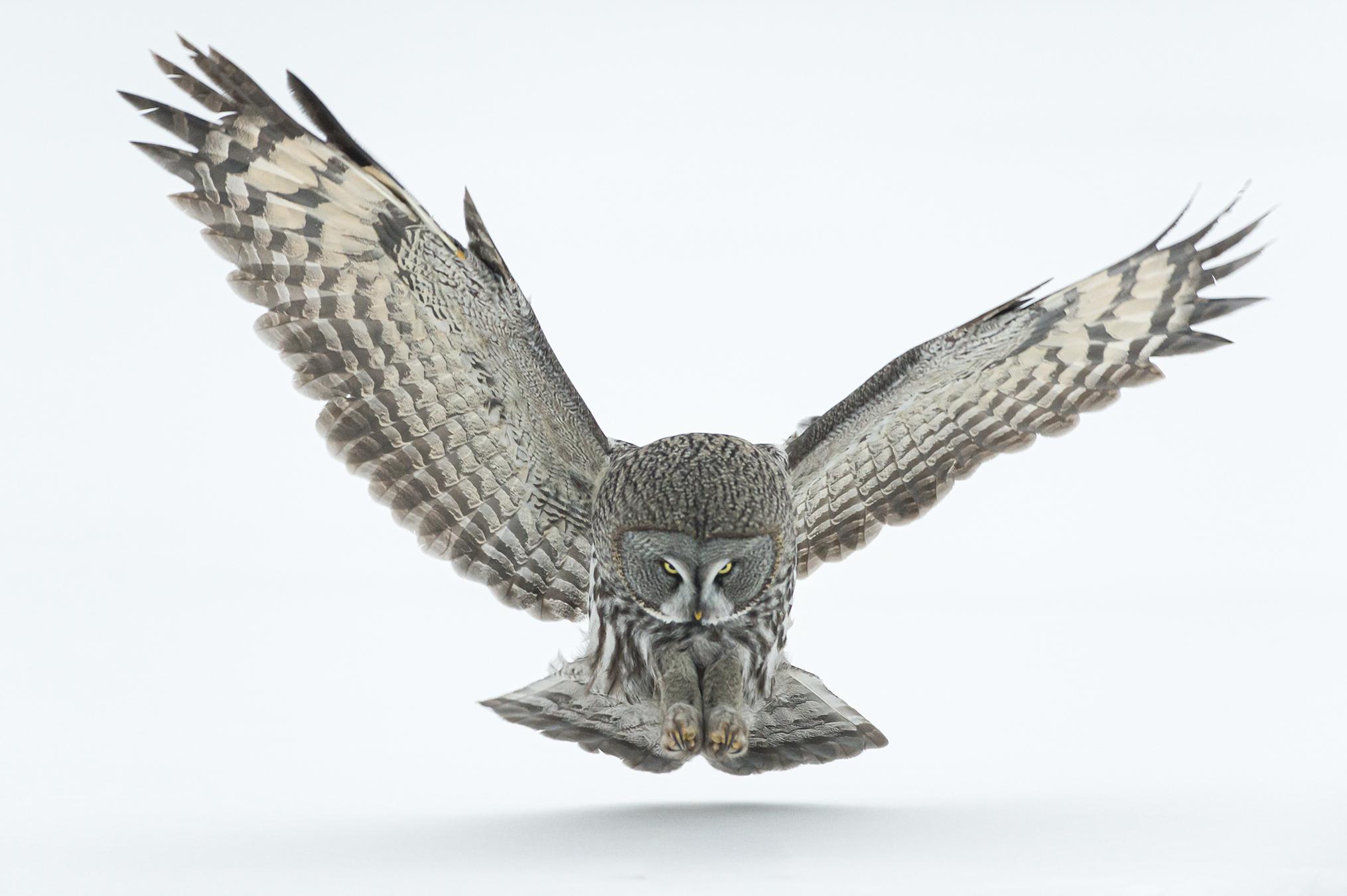 Soft Landing - Ignacio Medem - Portfolio Natural, Fotografía de Naturaleza de Autor
