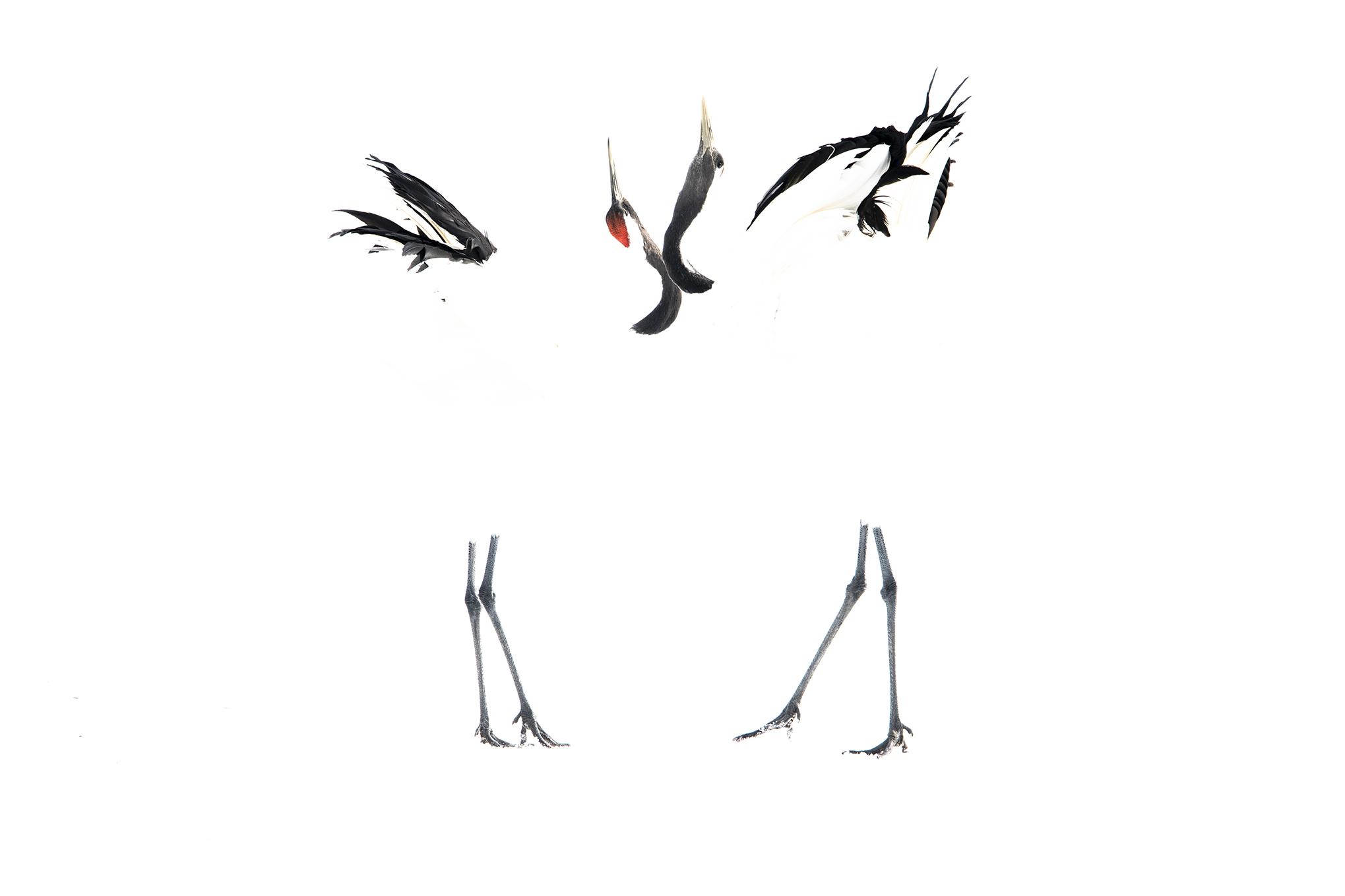 Love Dance - Ignacio Medem - Portfolio Natural, Fotografía de Naturaleza de Autor
