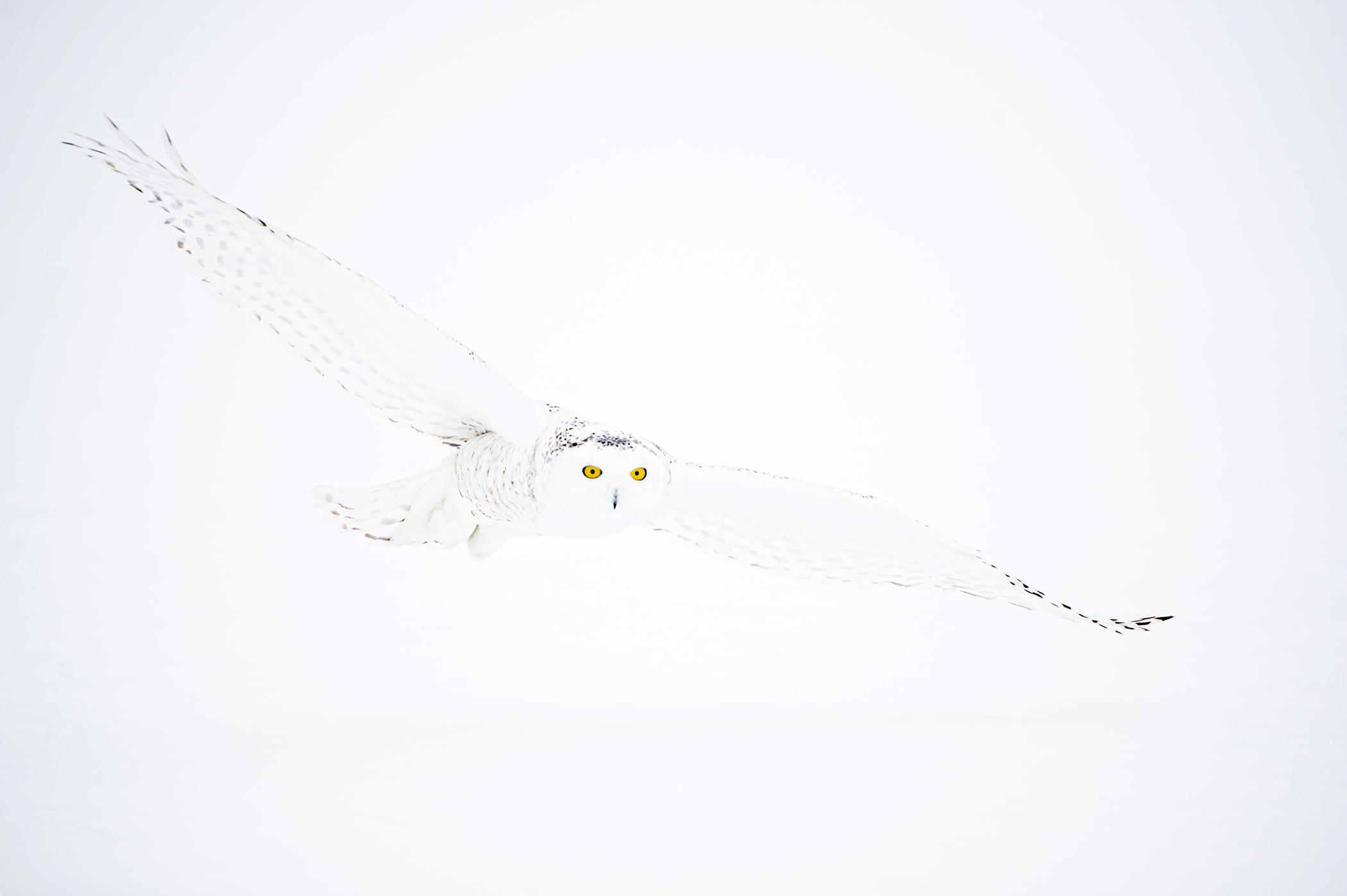 Snowy Glide - Ignacio Medem - Portfolio Natural, Fotografía de Naturaleza de Autor