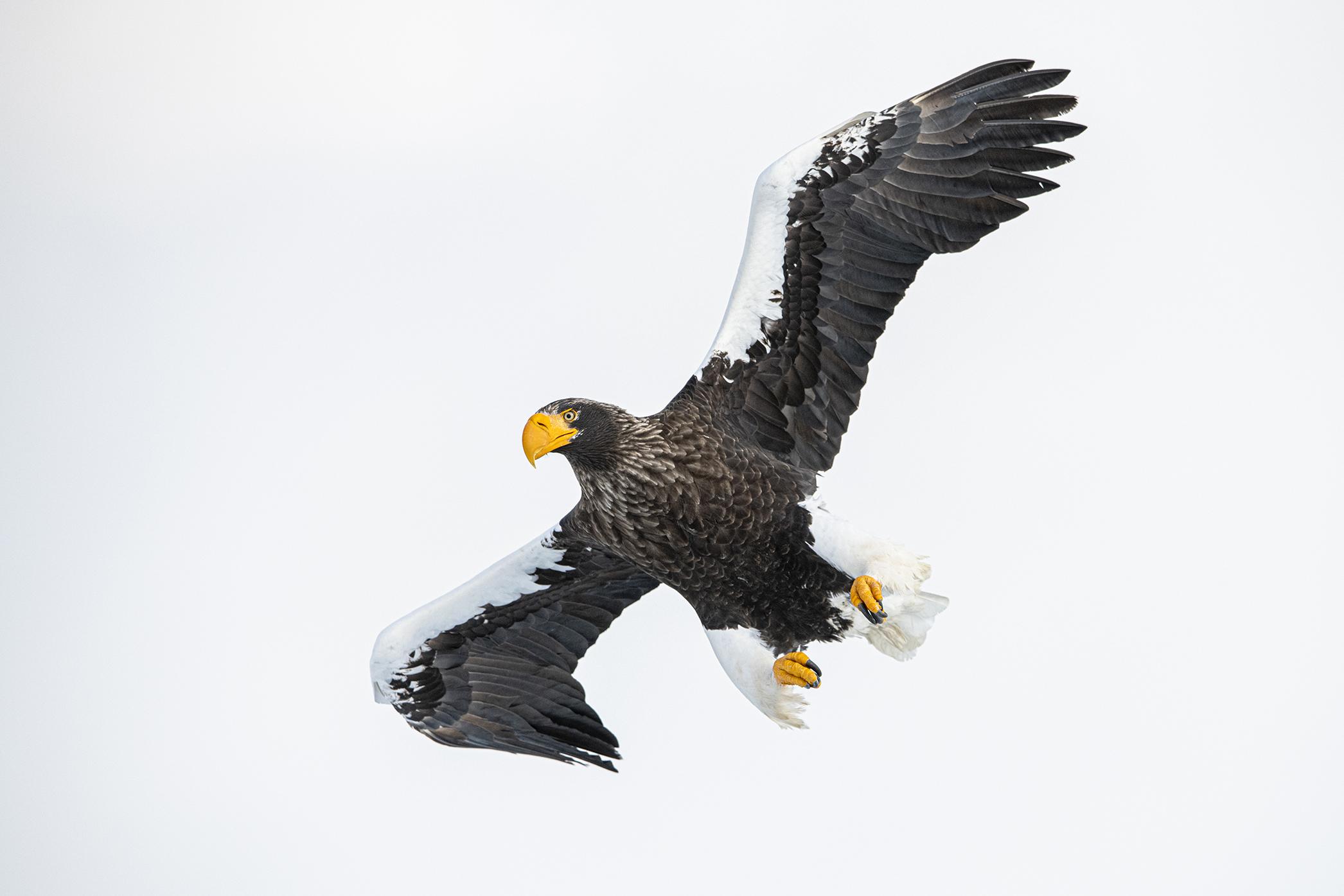 Steller Power - Ignacio Medem - Portfolio Natural, Fotografía de Naturaleza de Autor