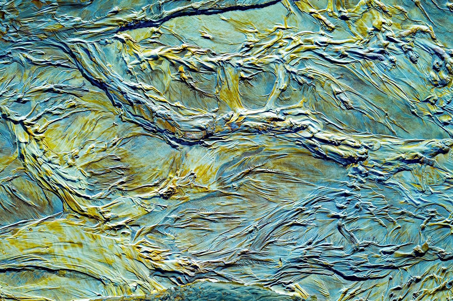 Oil Painting Details - Ignacio Medem - Portfolio Natural, Fotografía de Naturaleza de Autor
