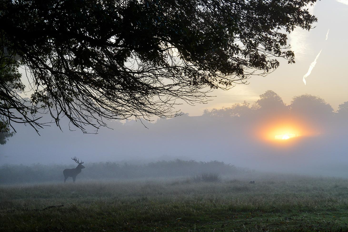 Stag at Sunrise - Ignacio Medem - Portfolio Natural, Fotografía de Naturaleza de Autor