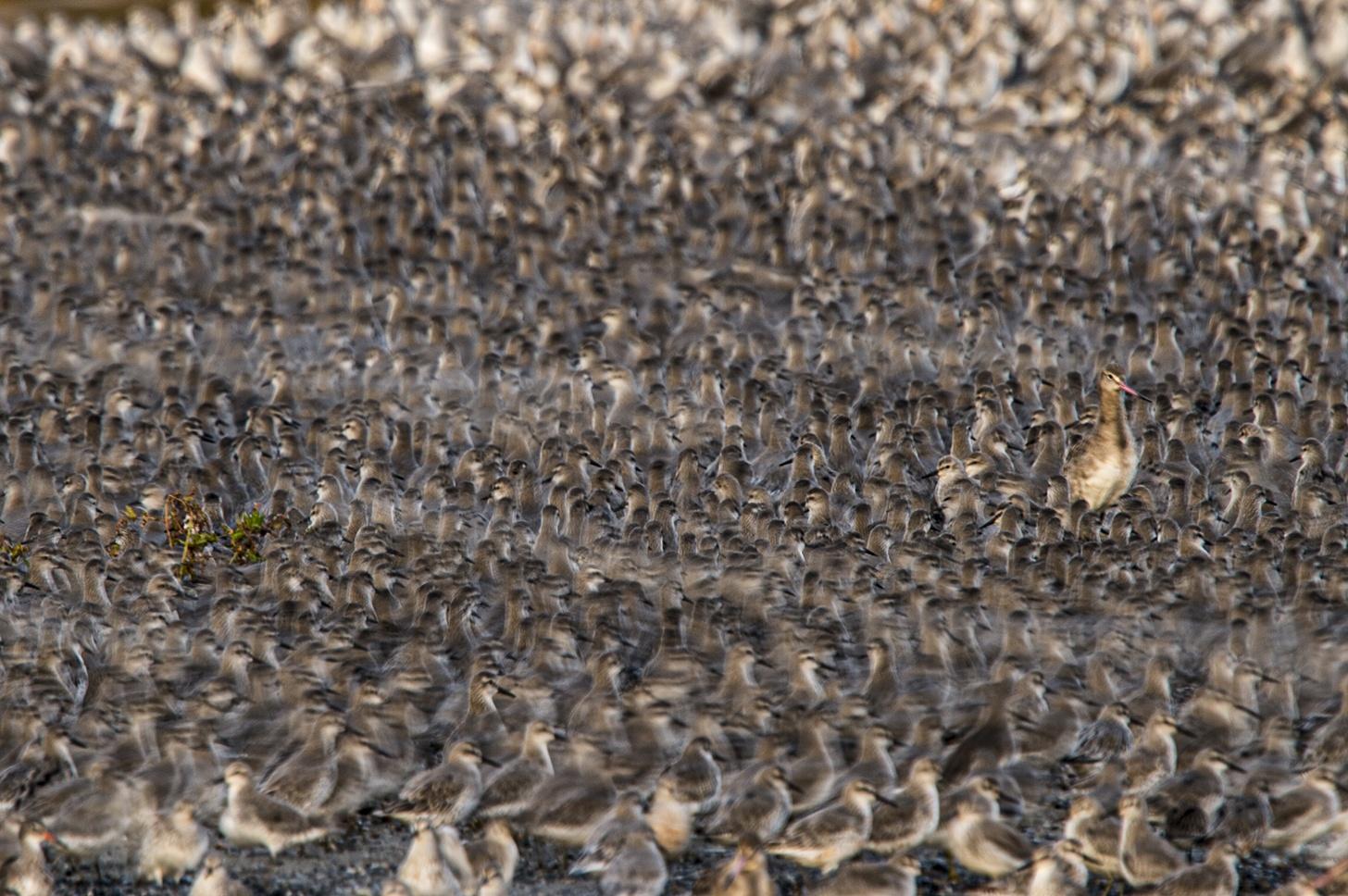 Cienes y Cienes - Ignacio Medem - Portfolio Natural, Fotografía de Naturaleza de Autor
