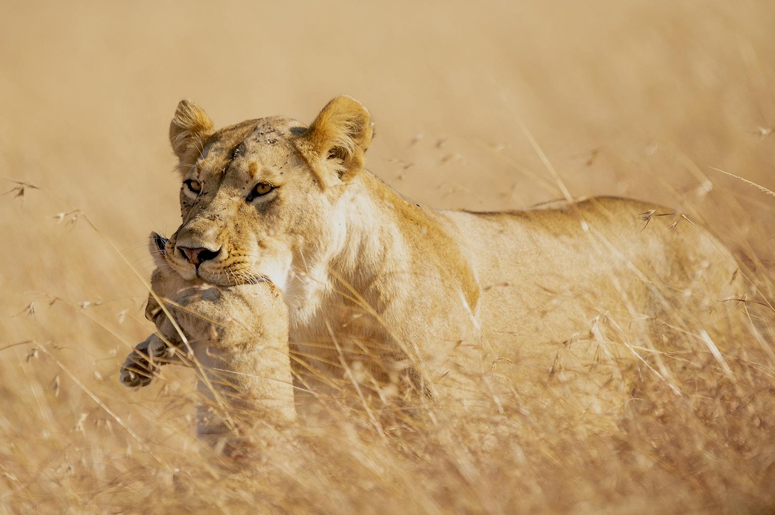 Always Mum - Ignacio Medem - Portfolio Natural, Fotografía de Naturaleza de Autor