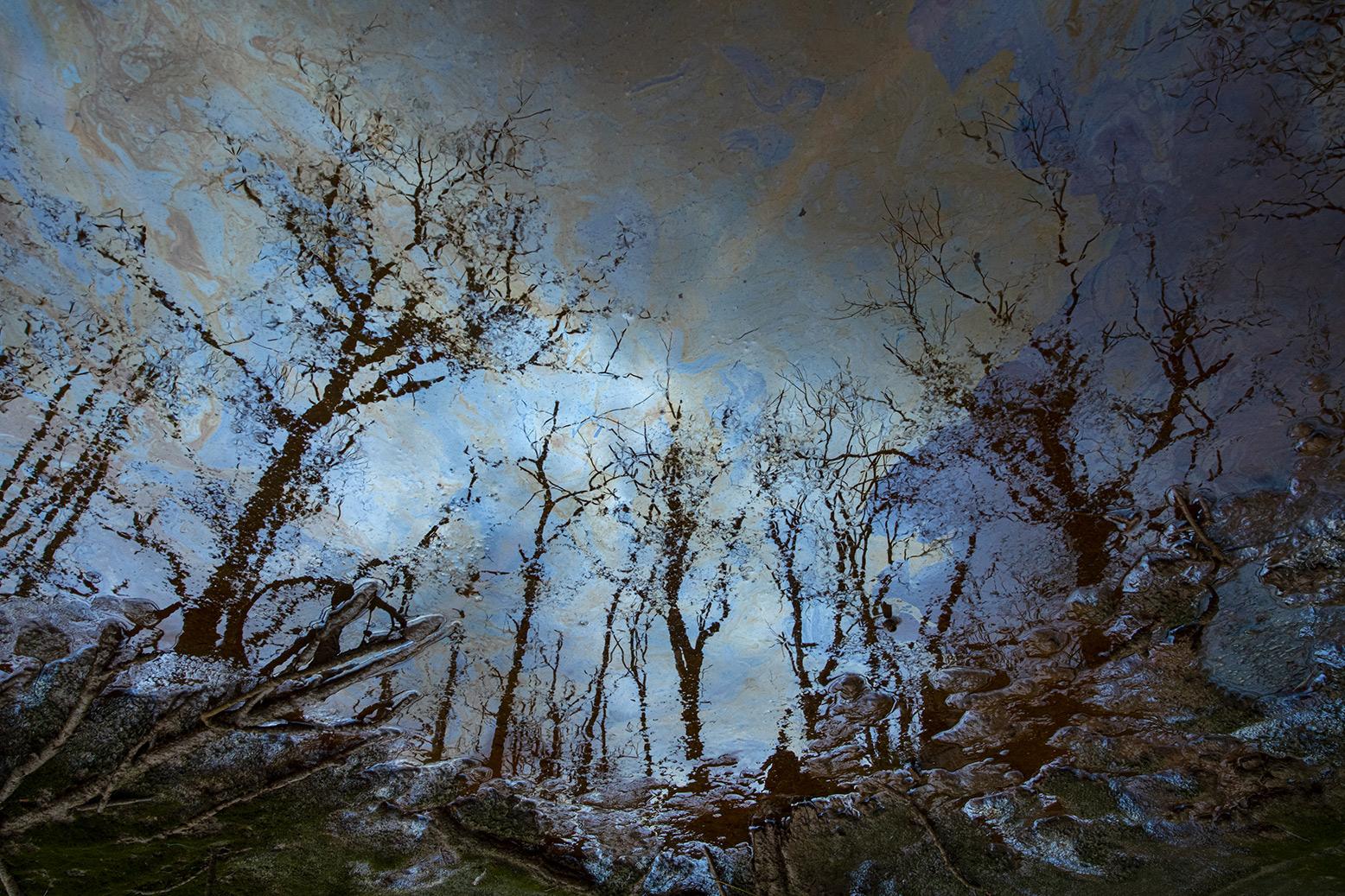 The Enchanted Forest - Ignacio Medem - Portfolio Natural, Fotografía de Naturaleza de Autor