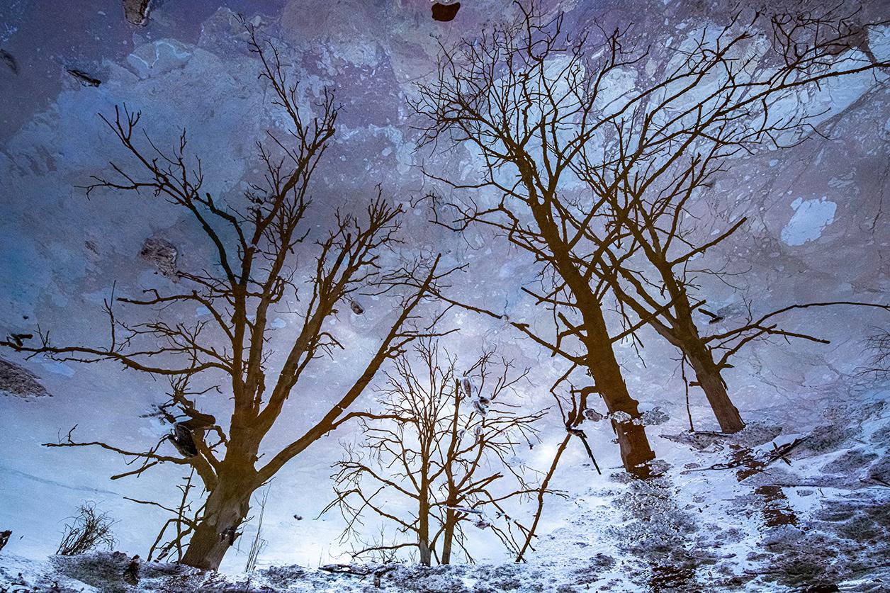 The Tree Sky - Ignacio Medem - Portfolio Natural, Fotografía de Naturaleza de Autor