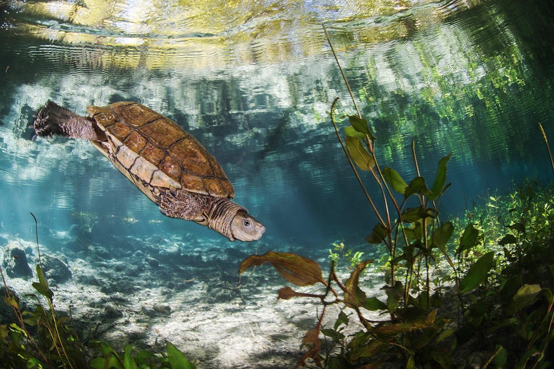 Javier Murcia Requena - Javier Murcia - Underwater Photography