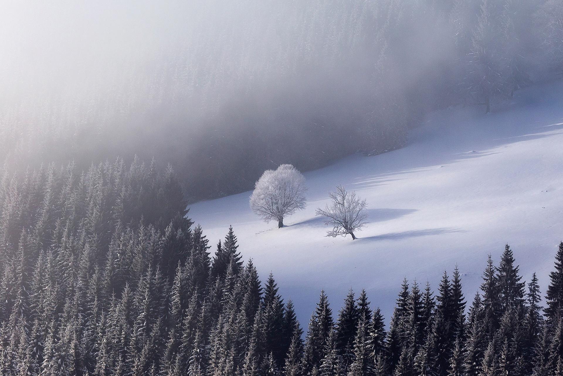 Ovidiu Lazar - Portfolio Natural, Fotografía de Naturaleza de Autor