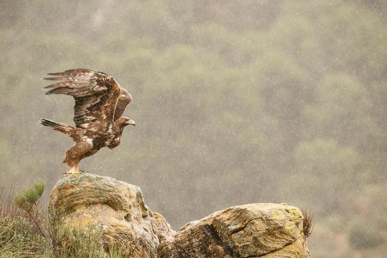 Jose Miguel Palao - Portfolio Natural, Fotografía de Naturaleza de Autor