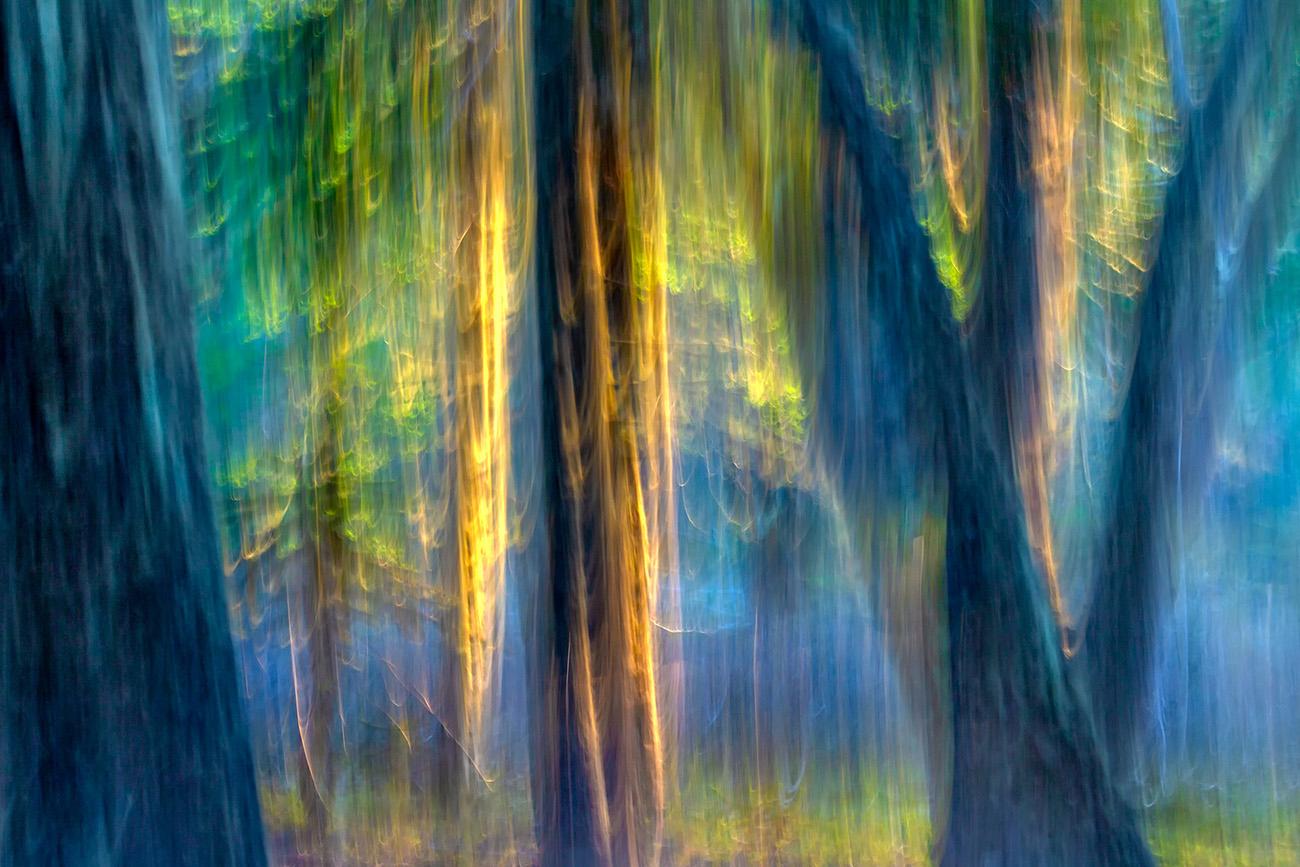 DARÍO PODESTÁ - Magic Forest II - Darío Podestá - Portfolio Natural, Fotografía de Naturaleza de Autor