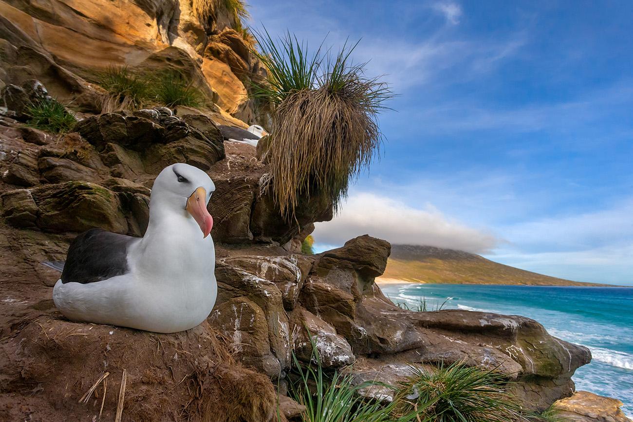DARÍO PODESTÁ - Albatros paradise - Darío Podestá - Portfolio Natural, Fotografía de Naturaleza de Autor