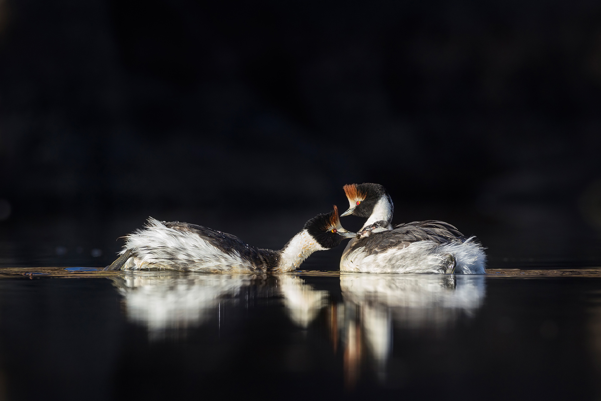DARÍO PODESTÁ - Endangered - Darío Podestá - Portfolio Natural, Fotografía de Naturaleza de Autor