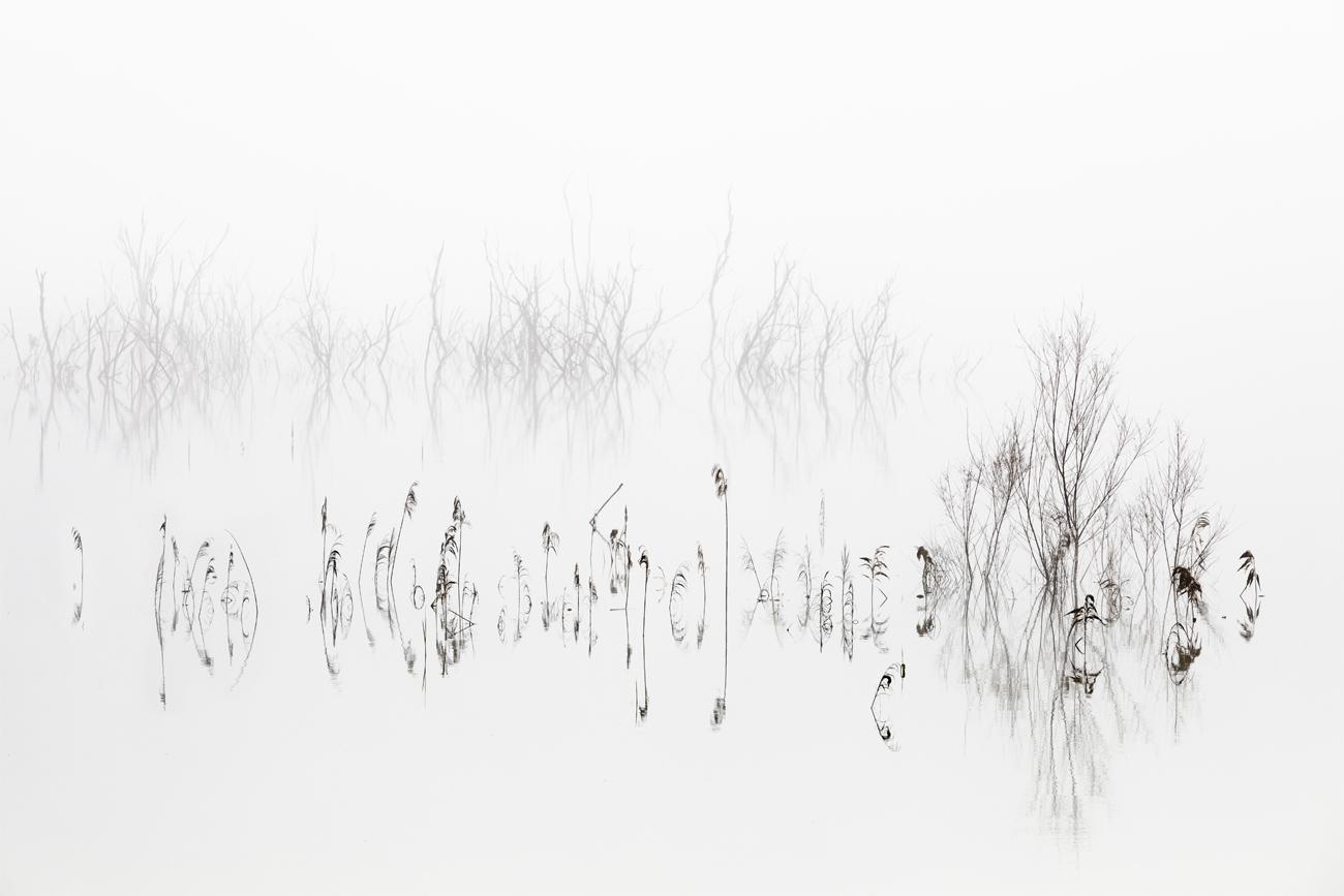 Vegetal Symphony - David Frutos Egea - David Frutos Egea - Portfolio Natural