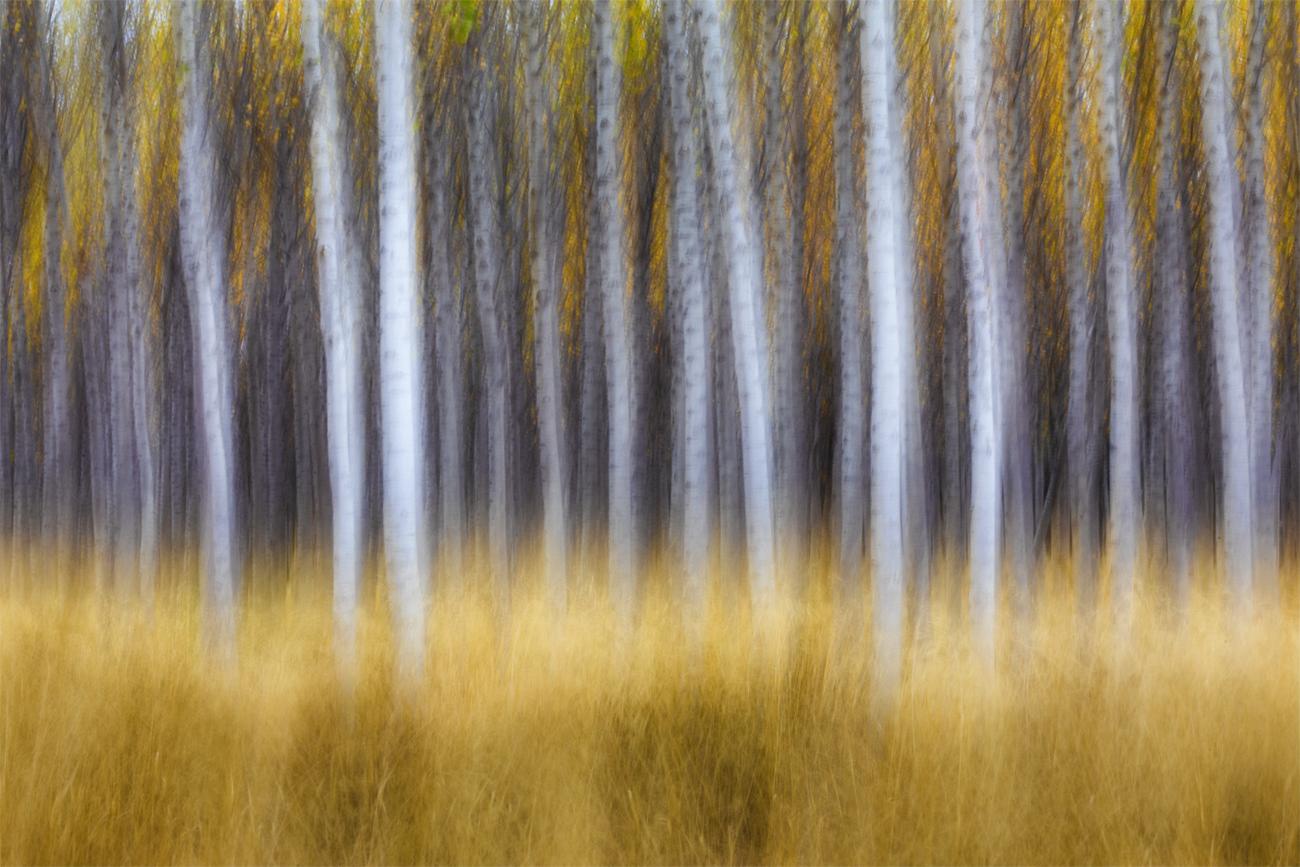 Autumn Games II - David Frutos Egea - David Frutos Egea - Portfolio Natural